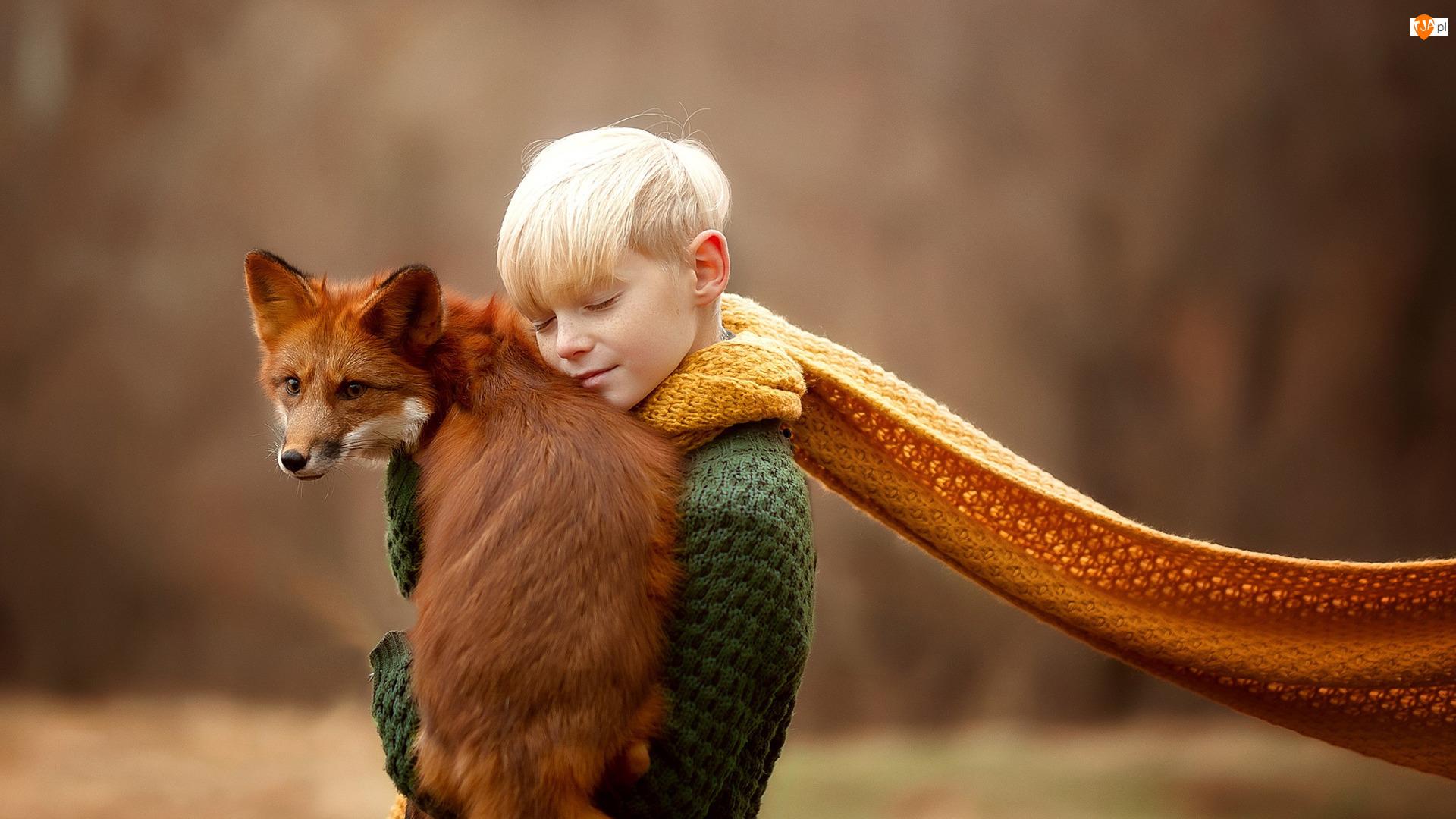 Lis, Chłopiec, Szalik