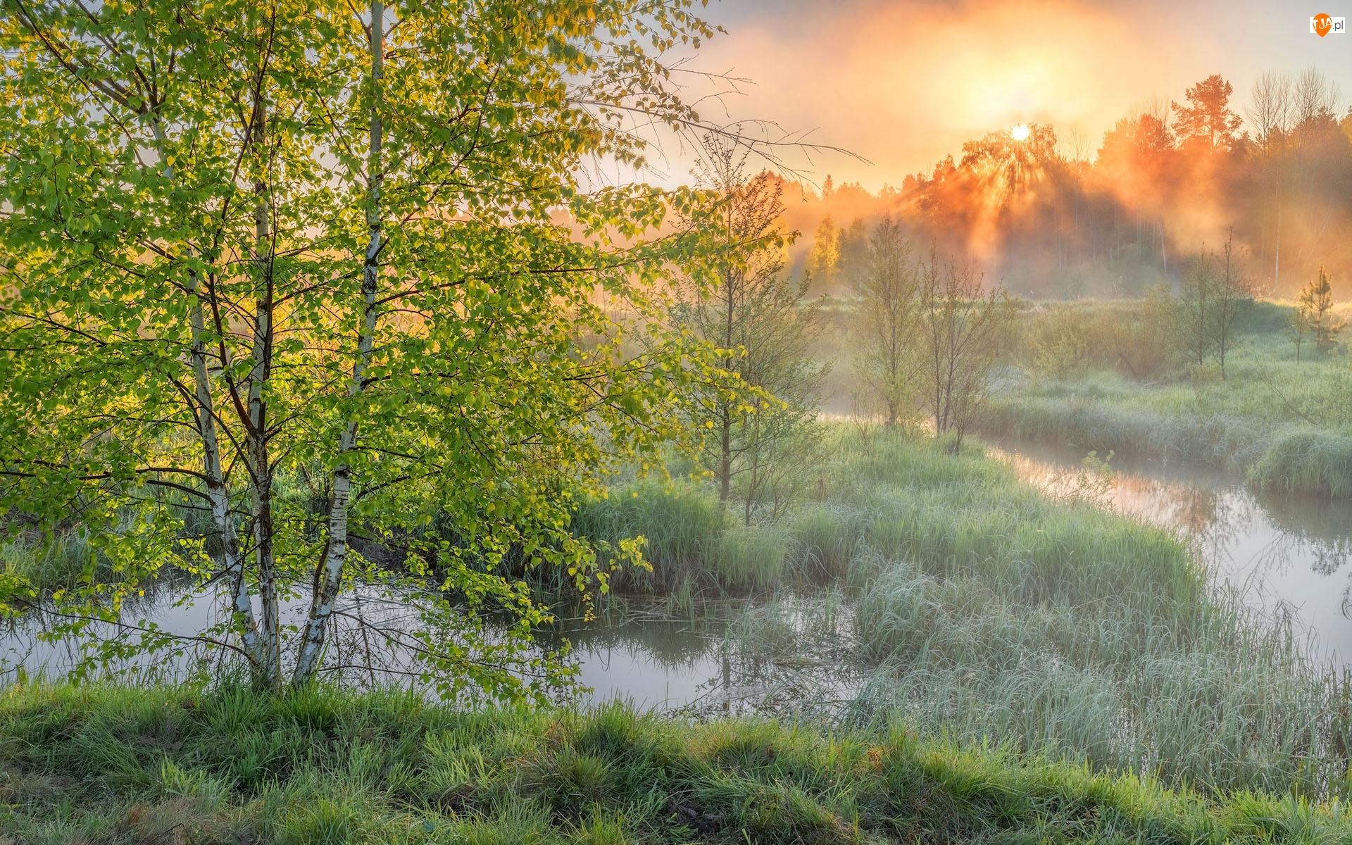 Rzeka, Trawa, Wiosna, Wschód słońca, Brzoza