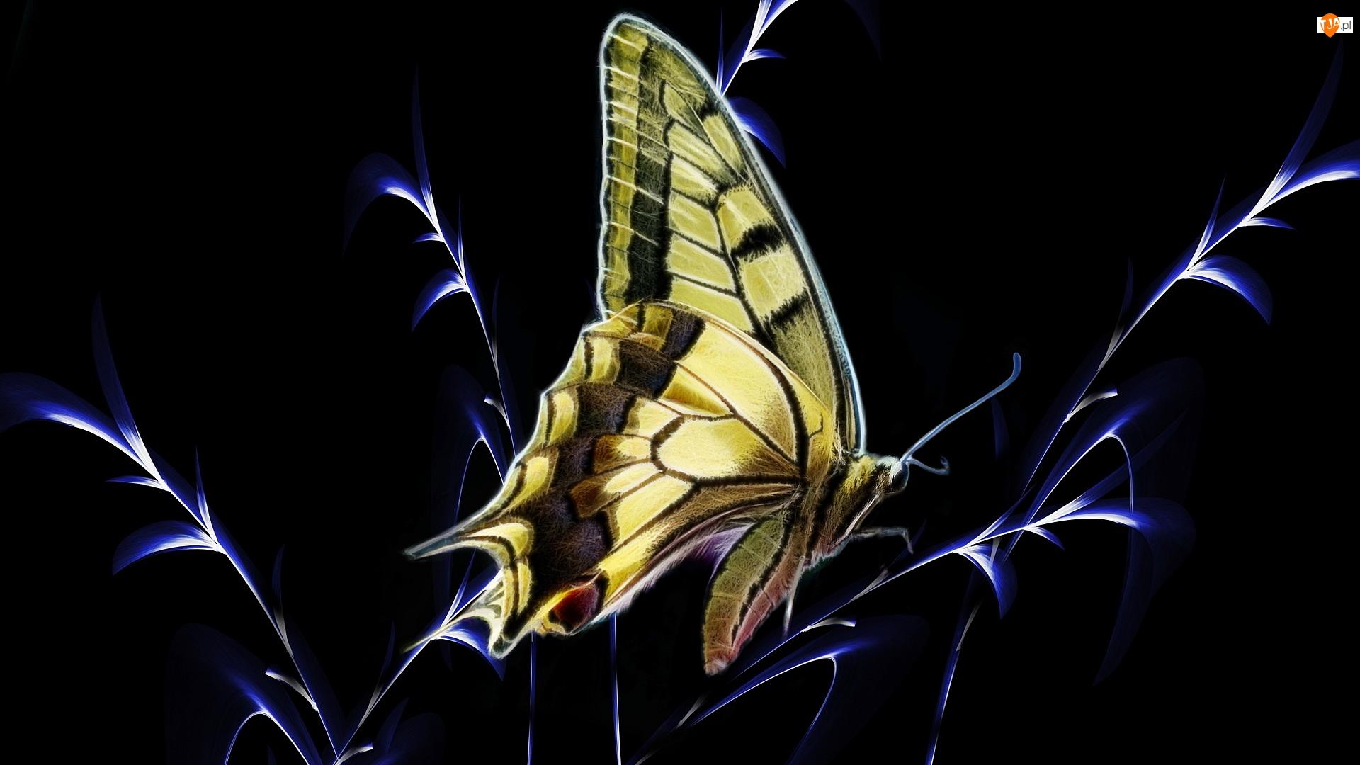 Paź królowej, Motyl, Czarne, Grafika, Trawa, Tło