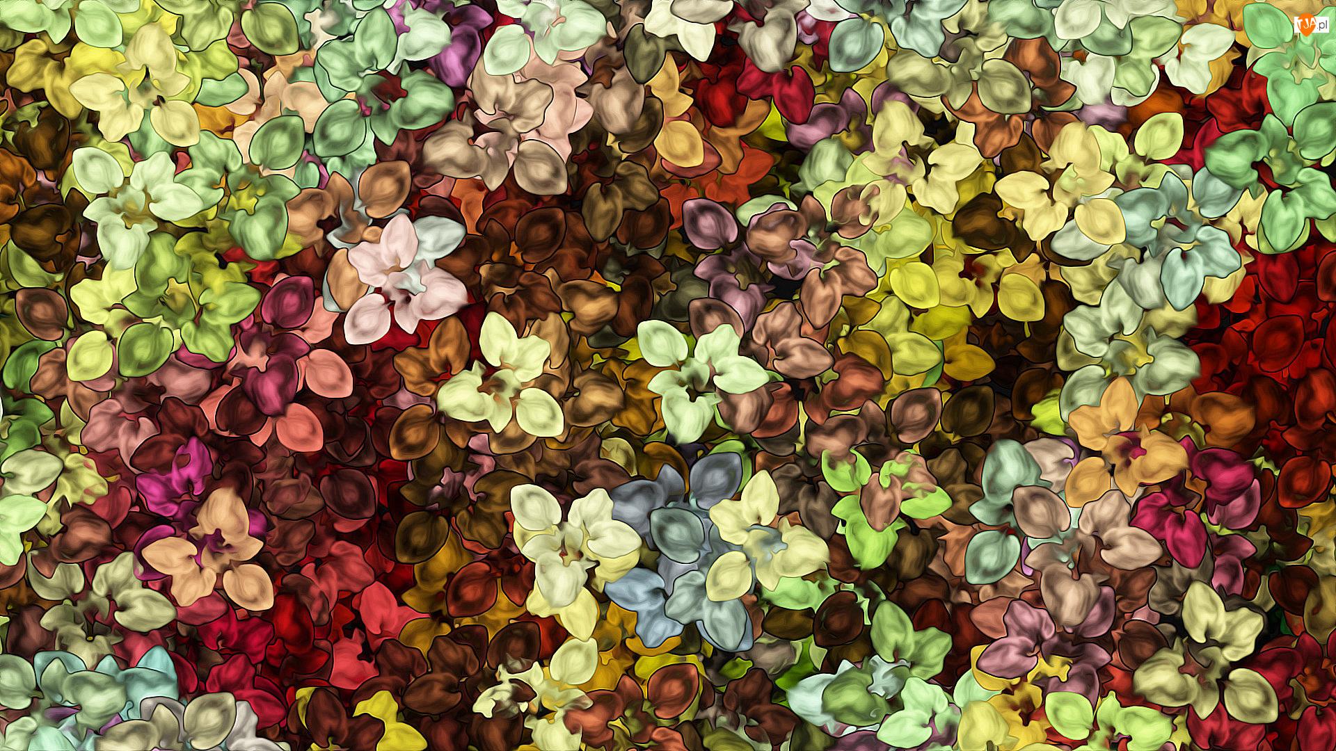 Kolorowa, Kwiaty, Tekstura