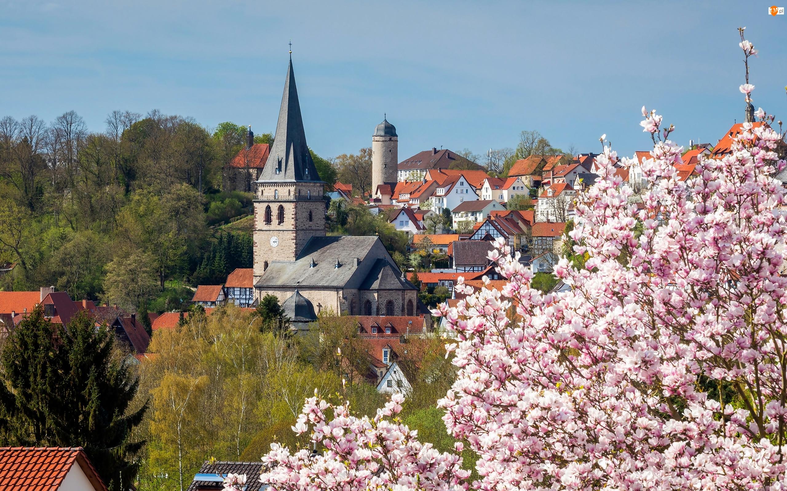 Wiosna, Nadrenia Północna-Westfalia, Drzewa, Kościół, Domy, Miasto Warburg, Kwitnąca, Niemcy, Magnolia