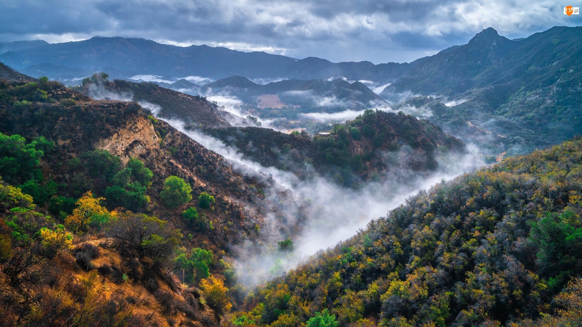Wąwóz, Stany Zjednoczone, Trawy, Mgła, Kalifornia, Góry Santa Monica, Roślinność, Park stanowy Malibu Creek