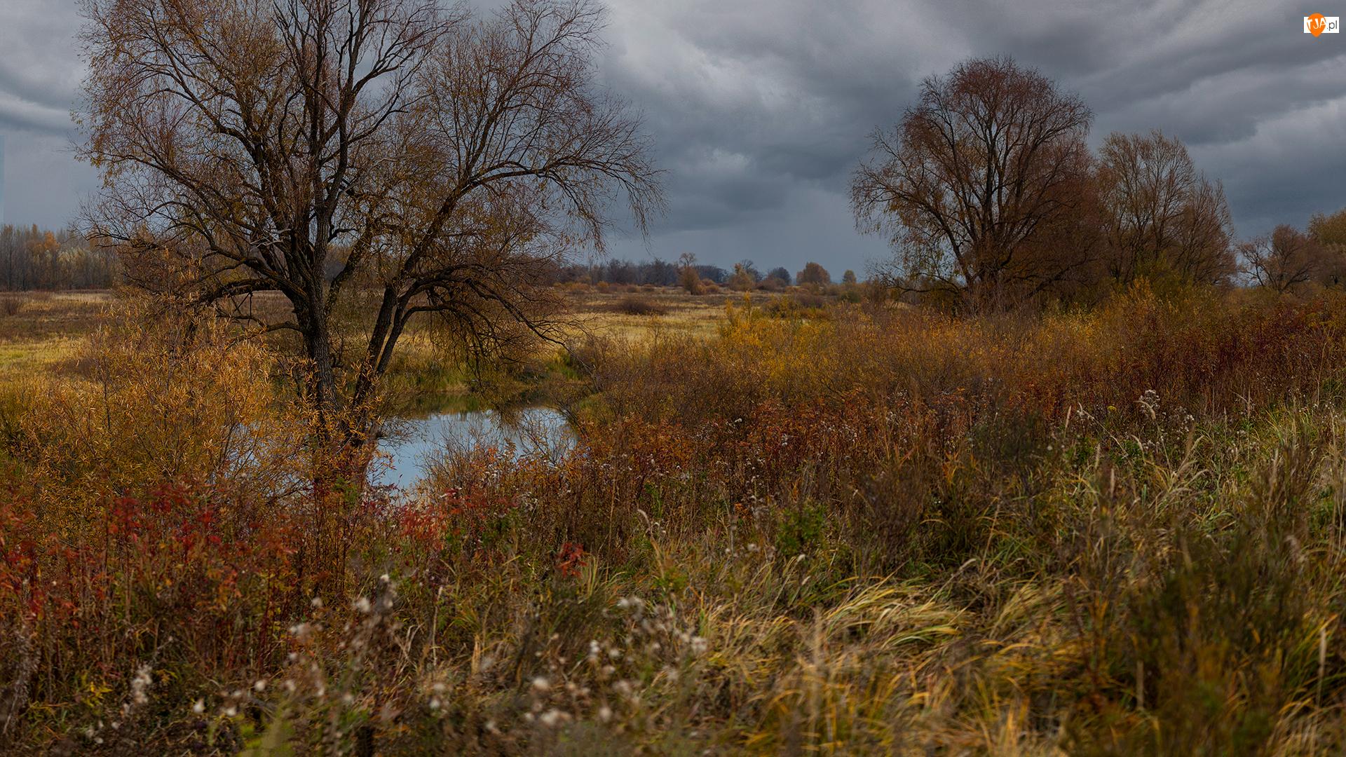 Chmury, Jesień, Rośliny, Łąki, Drzewa, Trawy