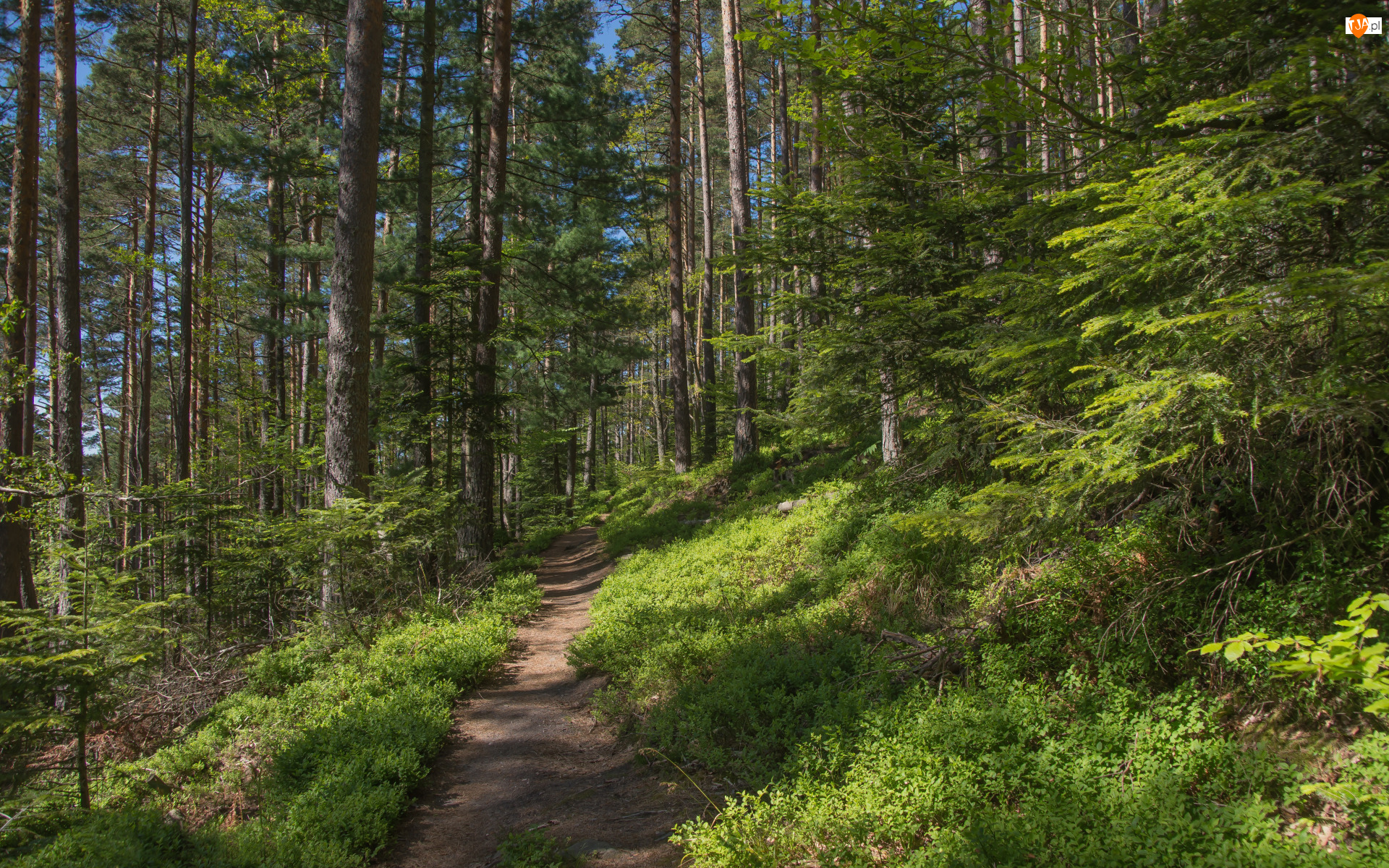 Ścieżka, Roślinność, Drzewa, Las, Krzewy