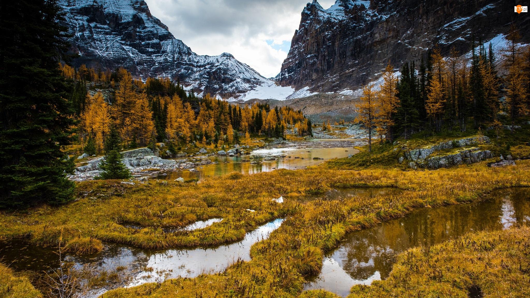 Góry, Jesień, Bagna, Drzewa, Śnieg, Trawa