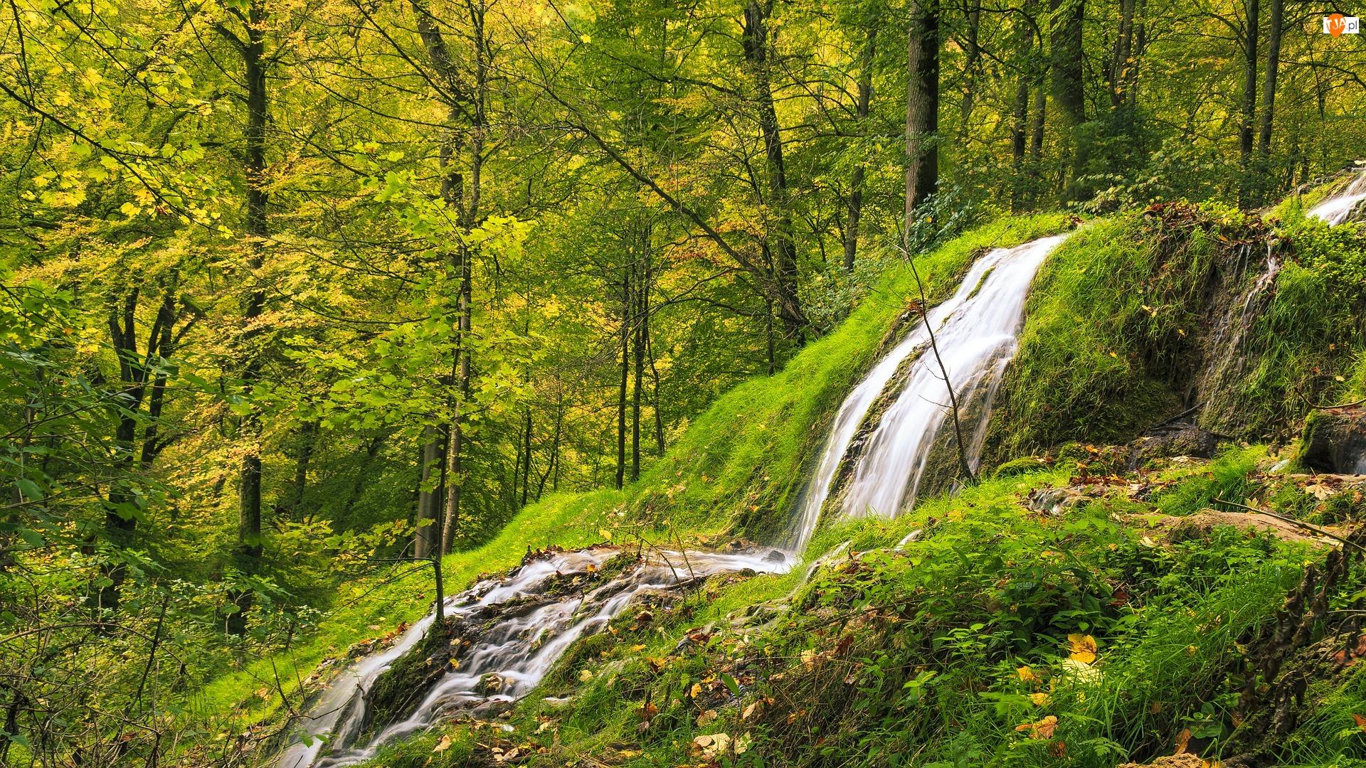 Zielona, Skały, Las, Wodospad, Roślinność