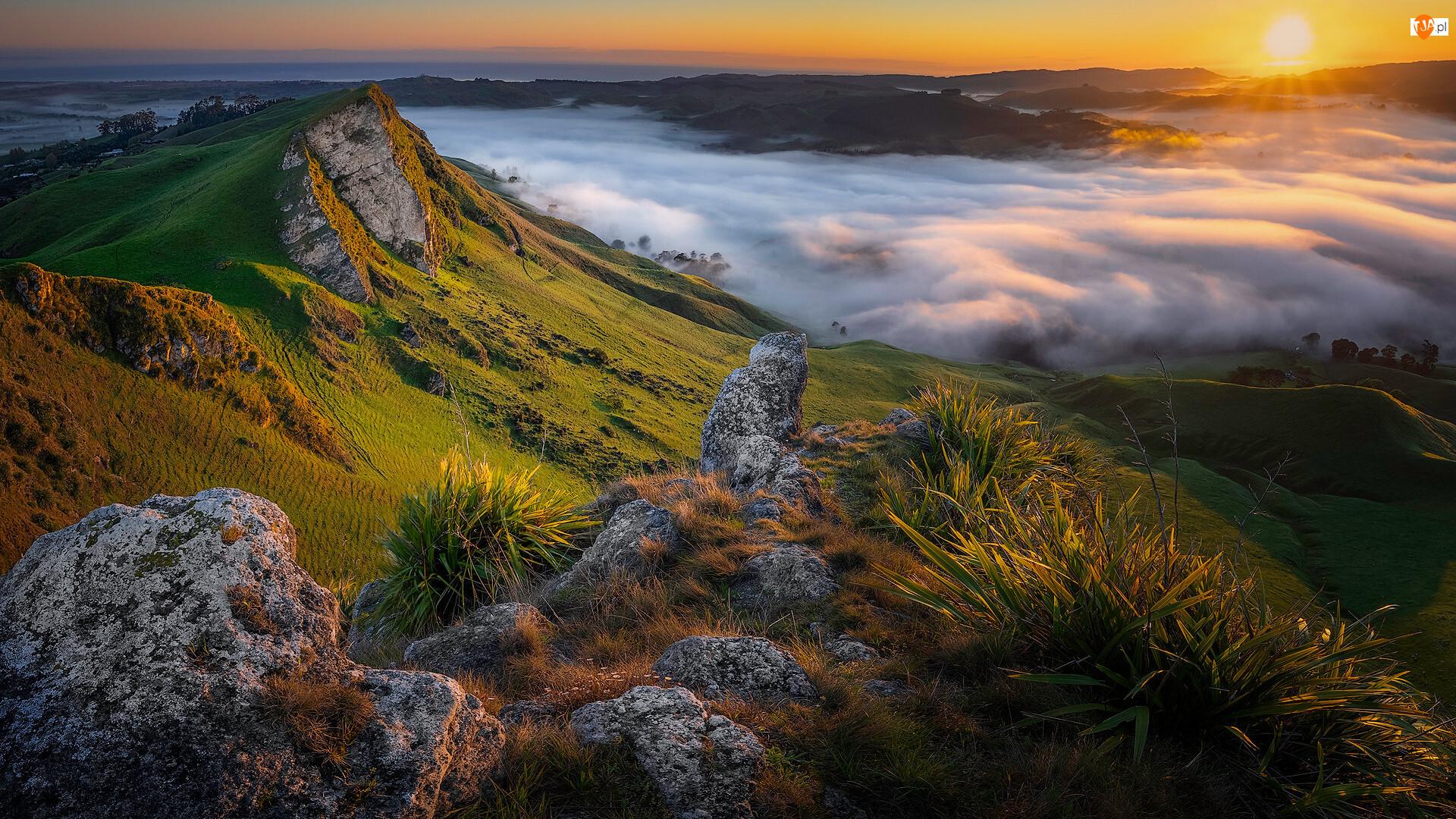 Nowa Zelandia, Góry, Tuki Tuki Valley, Rośliny, Dolina, Opadająca, Mgła, Wschód słońca, Skały
