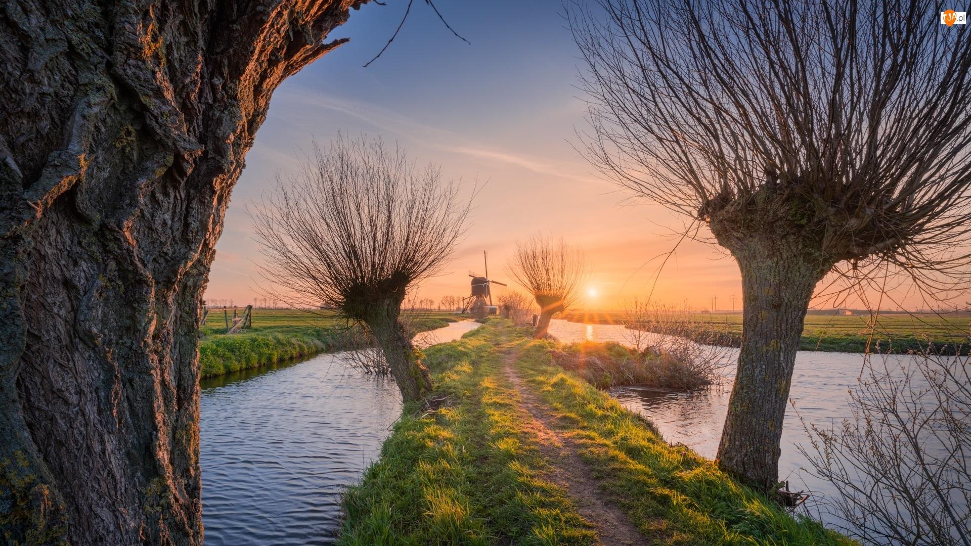 Rzeka, Wschód słońca, Holandia, Wiatraki, Wieś Kinderdijk, Wierzby, Drzewa