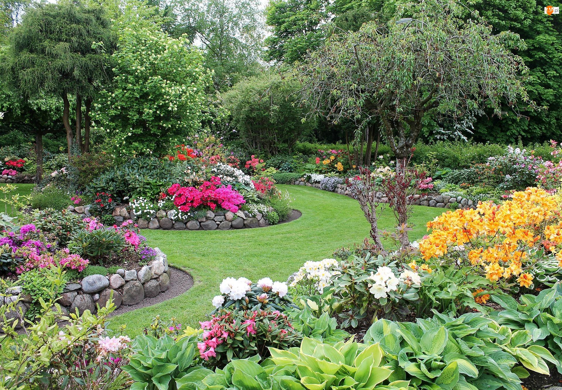 Różaneczniki, Ogród, Kwiaty, Drzewa