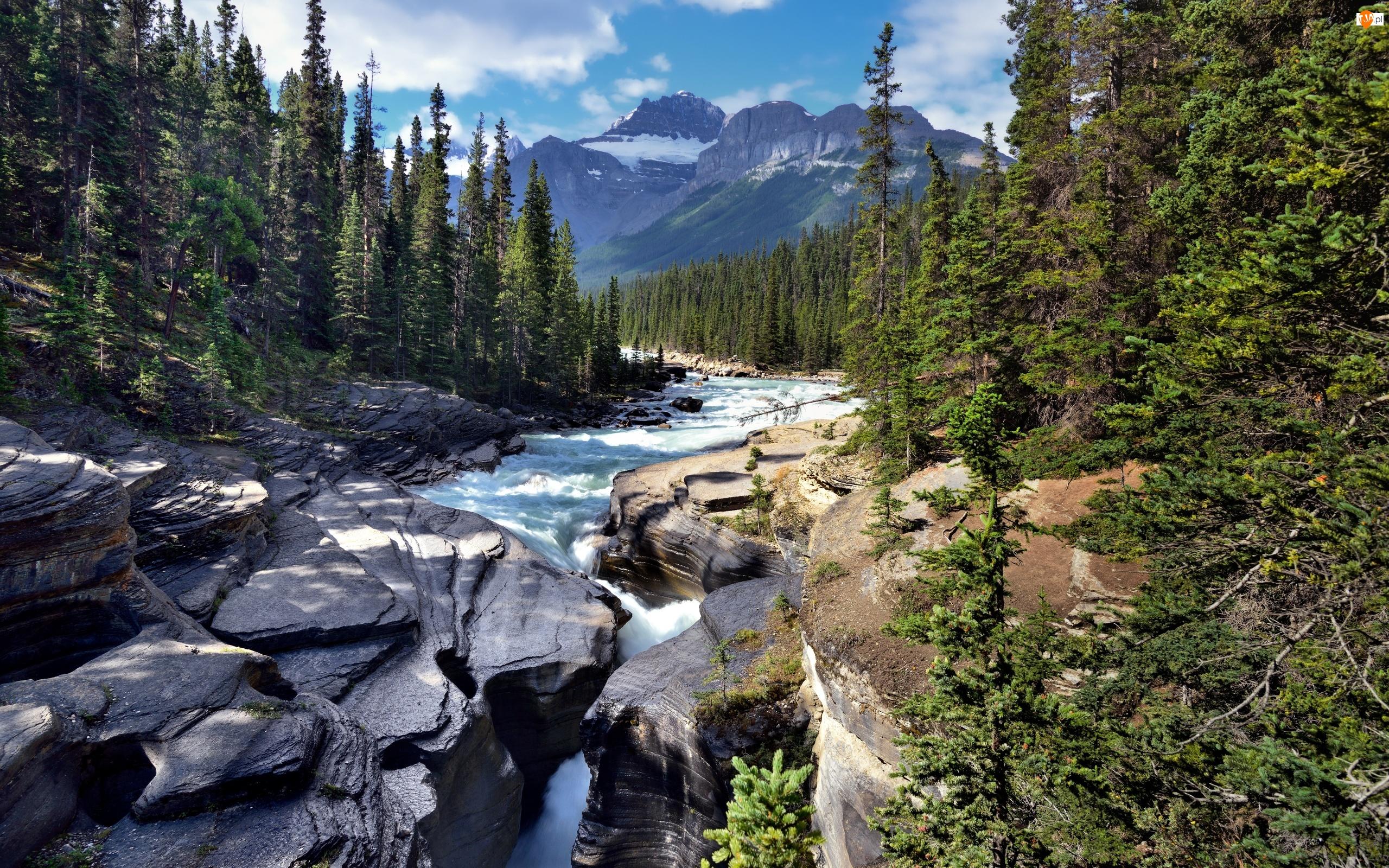Las, Góry, Skały, Rzeka, Drzewa