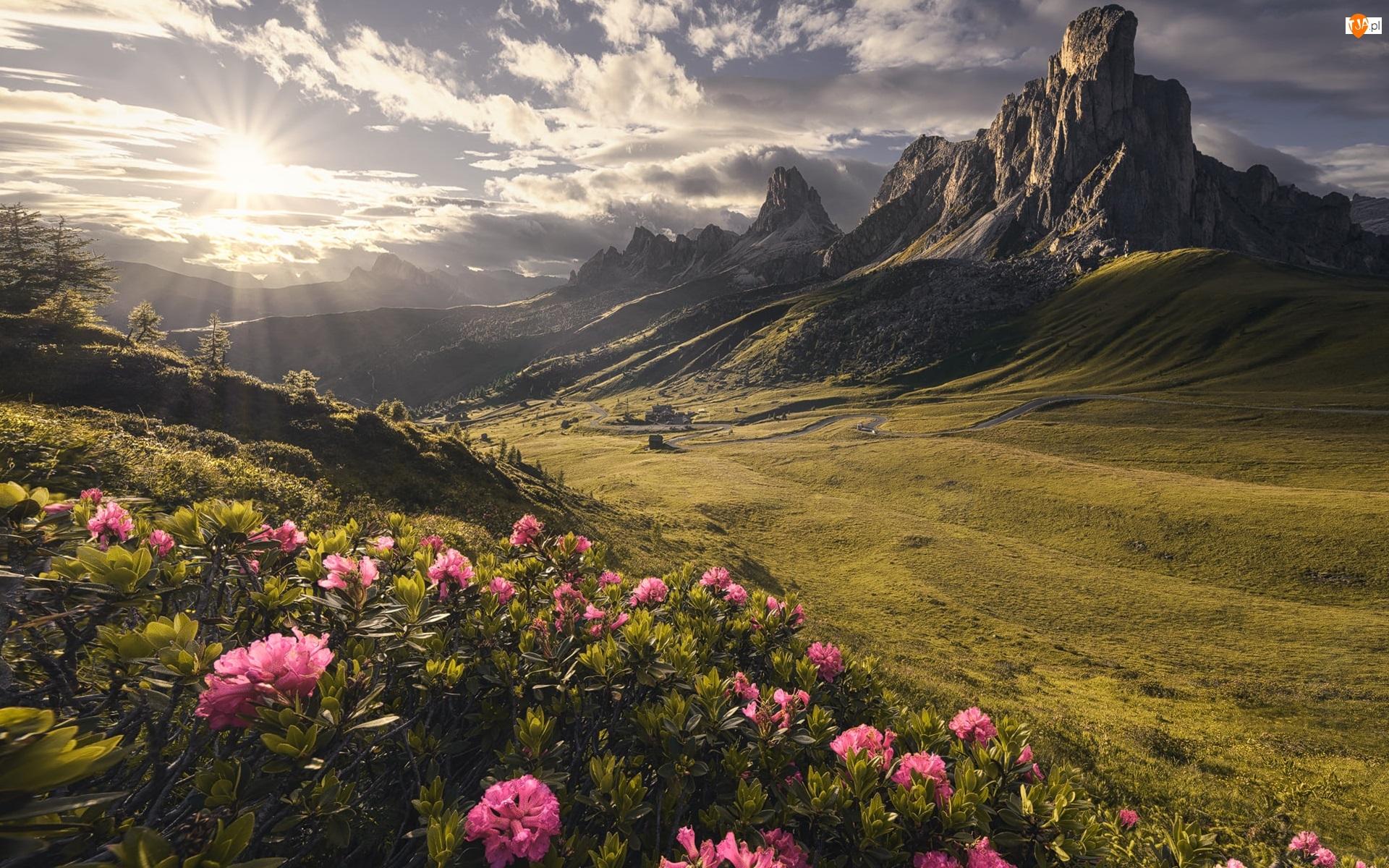 Góry, Droga, Promienie słońca, Różaneczniki, Przełęcz, Chmury Prowincja Belluno, Kręta, Dolomity, Kwiaty, Passo di Giau, Włochy