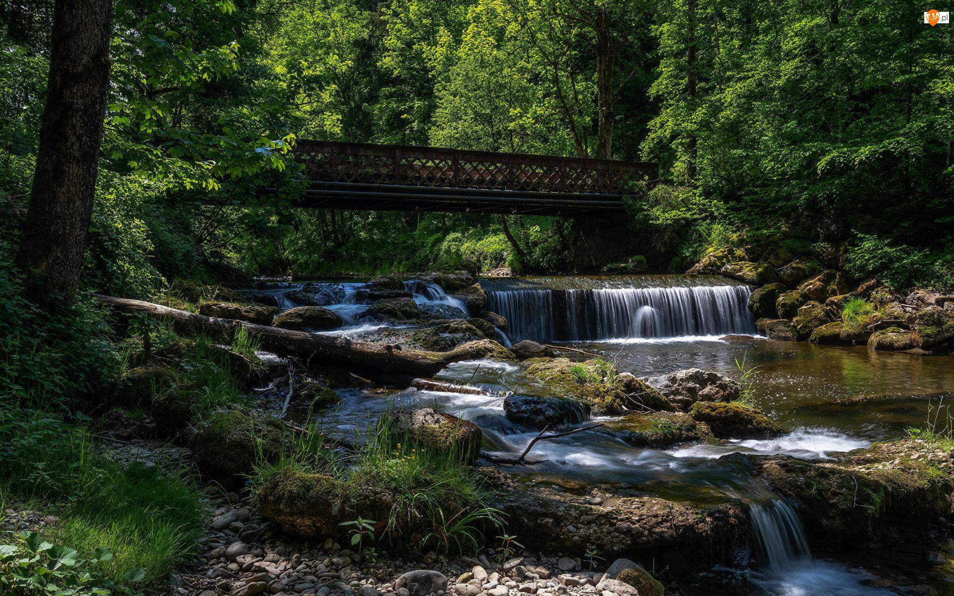 Rzeka, Kamienie, Drzewa, Las, Most