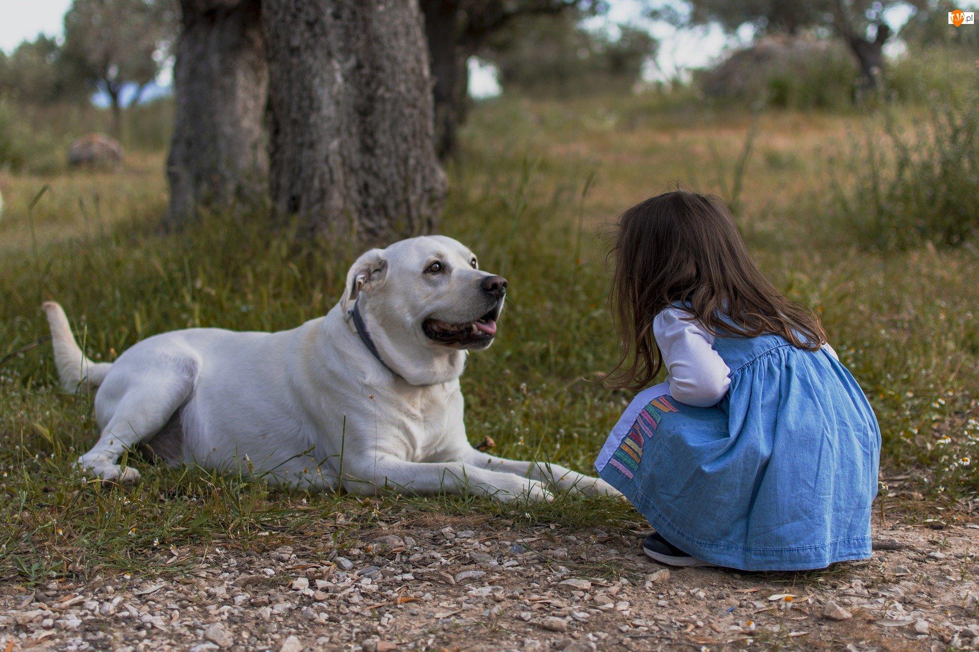 Drzewa, Dziewczynka, Pies, Trawa