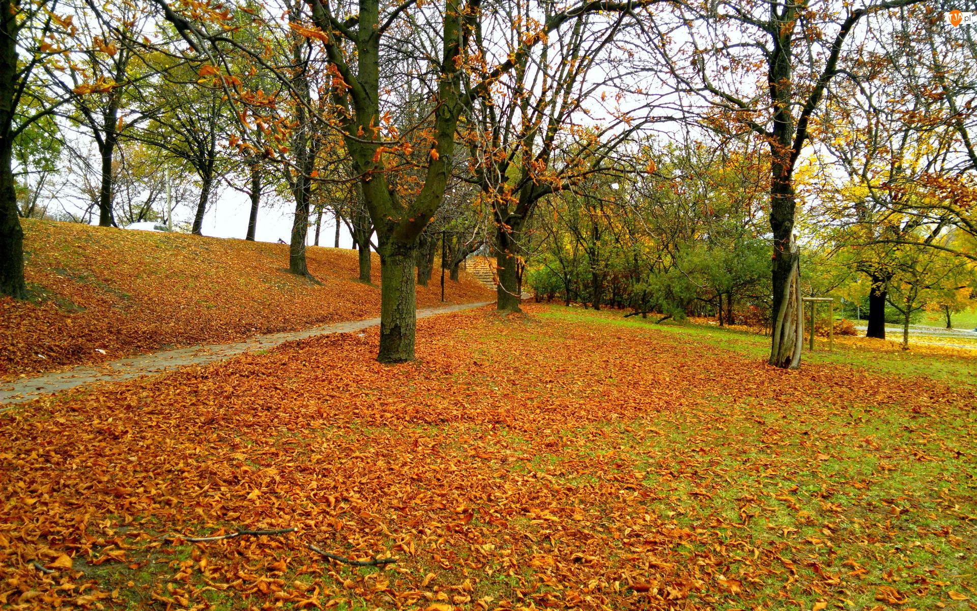 Park, Jesień, Alejka, Liście, Drzewa, Opadłe