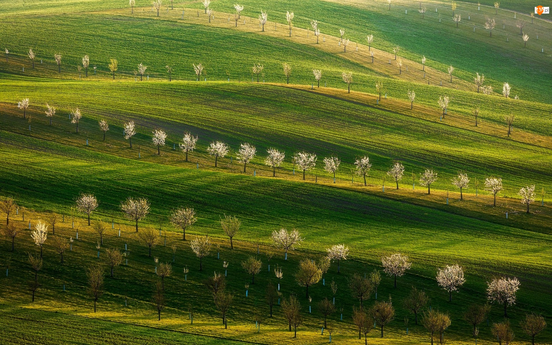 Drzewa owocowe, Wzgórza, Pole, Łąka