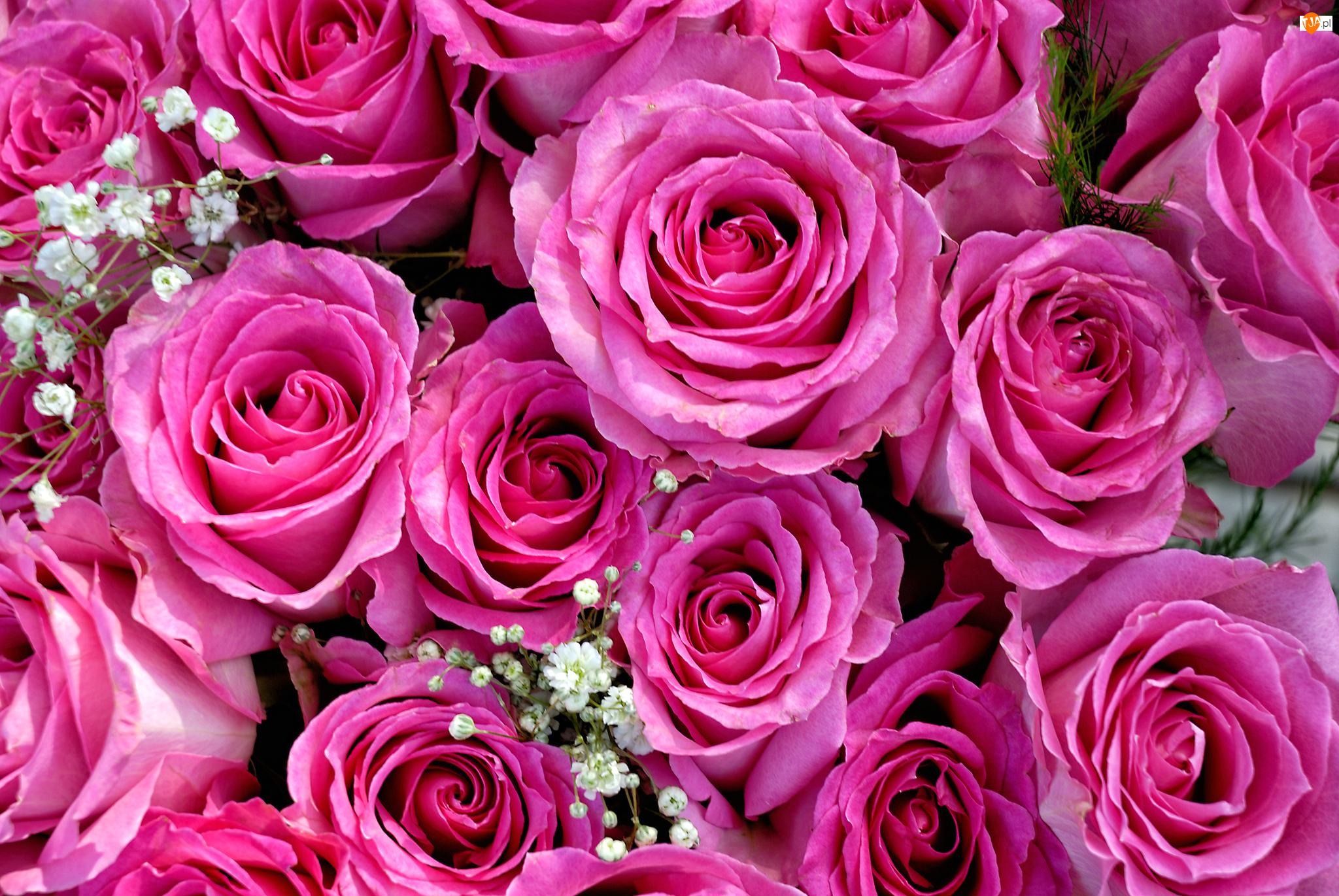 Gipsówka, Różowe, Róże