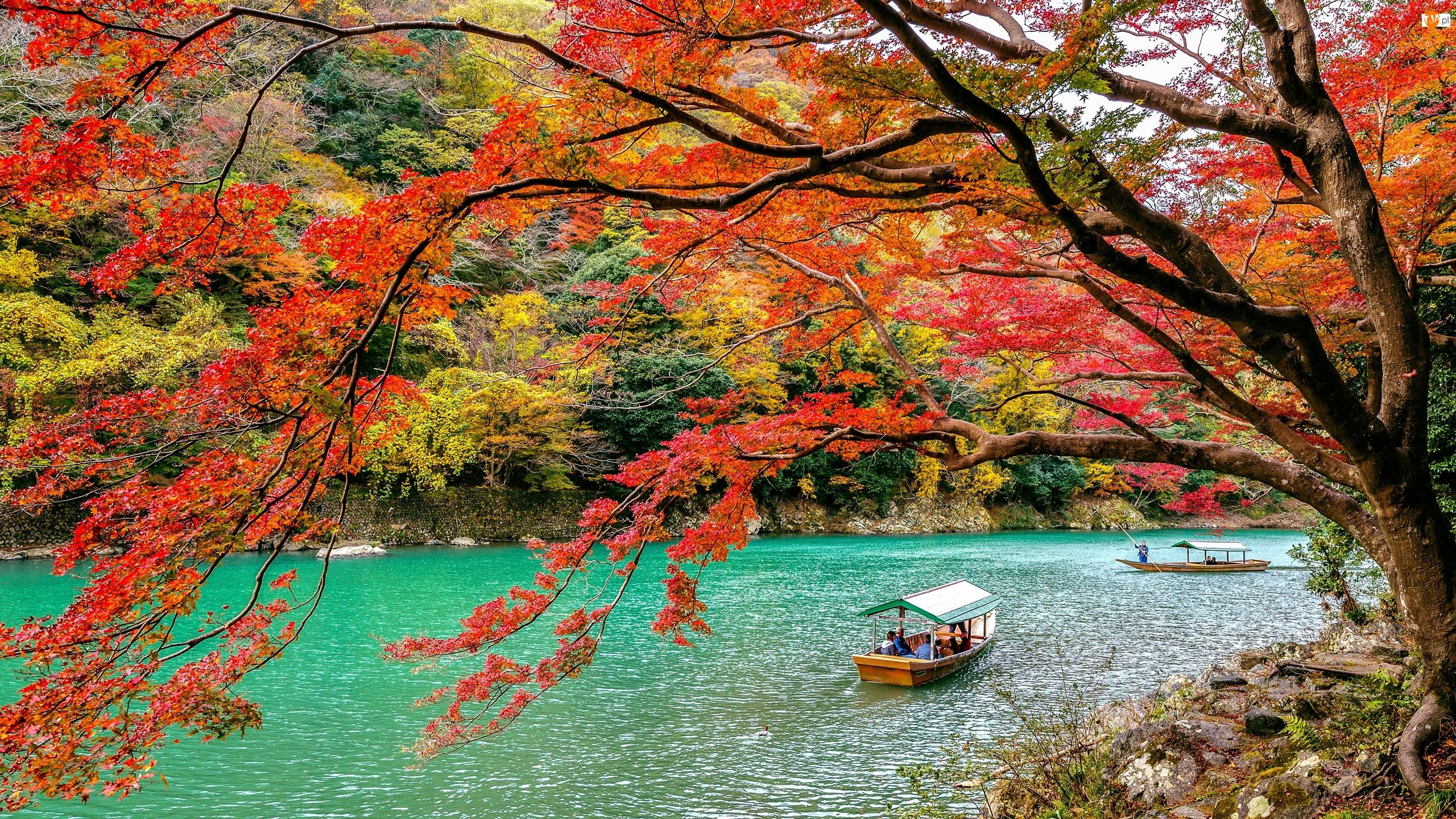 Łódki, Kolorowe, Japonia, Rzeka Hozu, Kioto, Dzielnica Arashiyama, Drzewa
