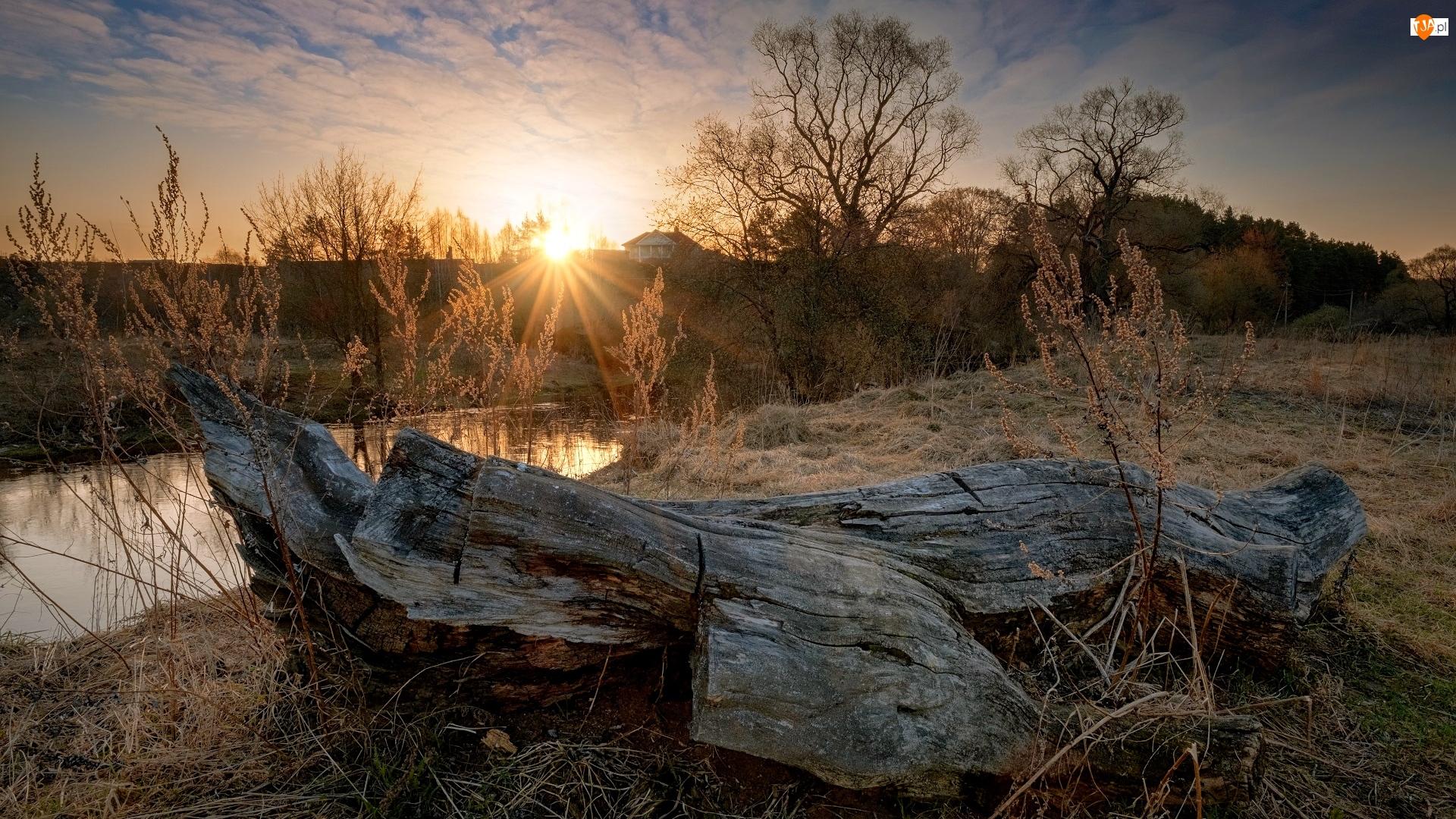Pień, Wschód słońca, Rzeka, Drzewa