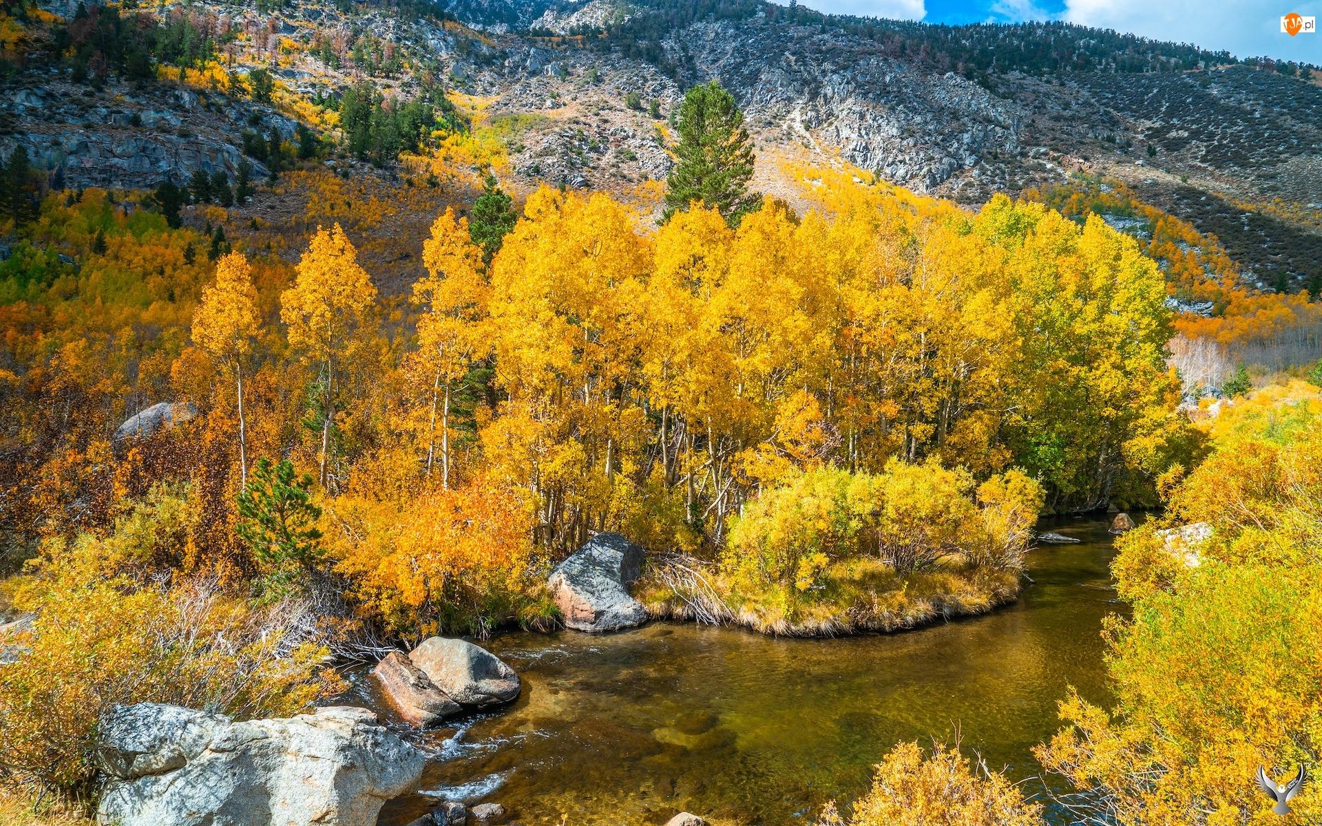 Stany Zjednoczone, Bishop Creek, Kalifornia, Drzewa, Góry, Jesień, Krzewy, Rzeka, Pożółkłe