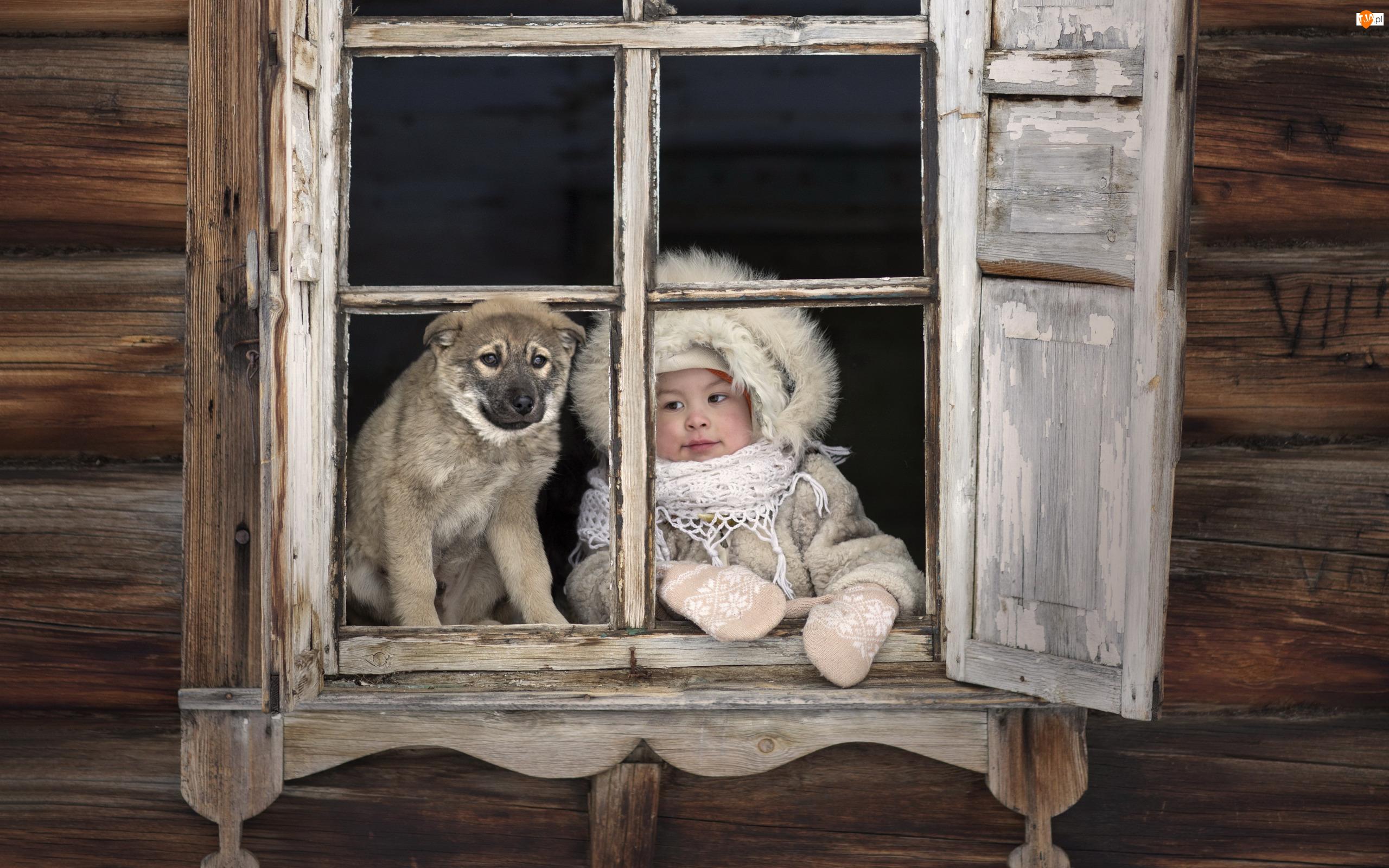 Okno, Dziecko, Dziewczynka, Pies