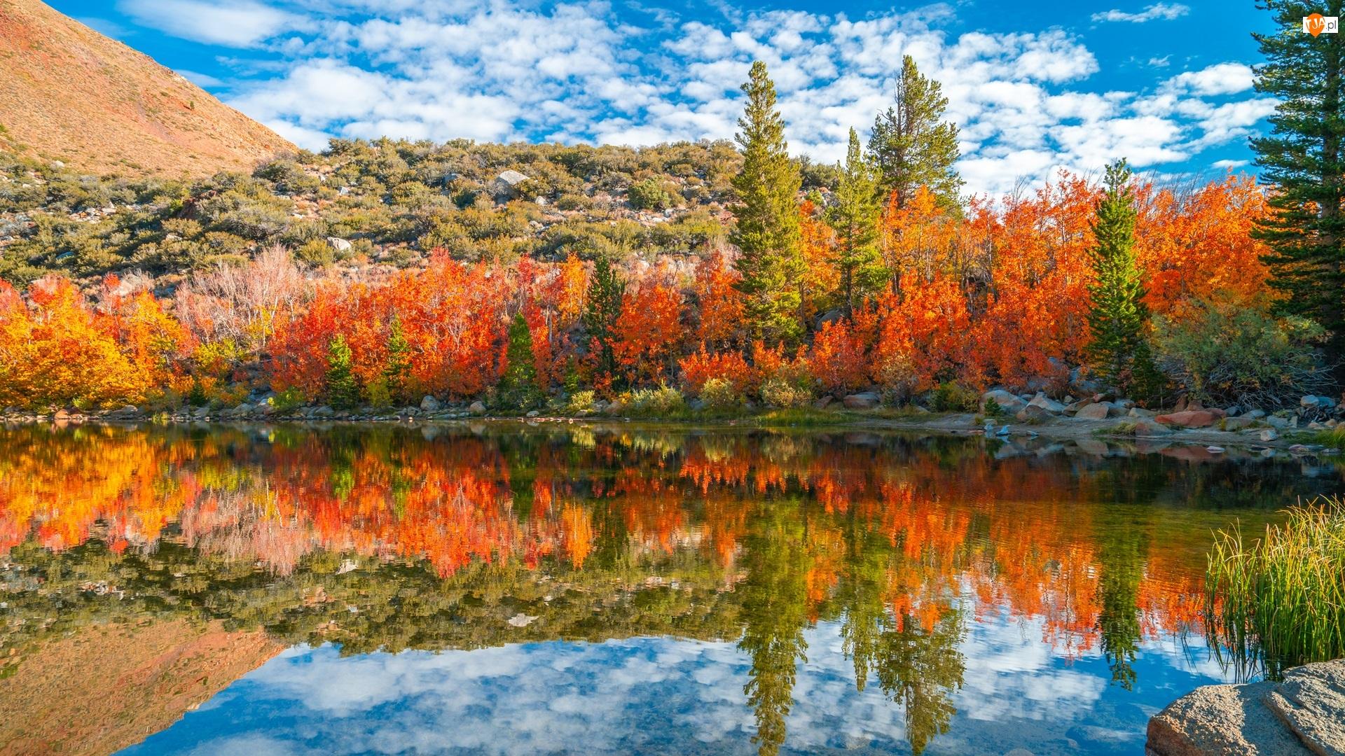 Stany Zjednoczone, Bishop Creek, Kalifornia, Góry, Chmury, Jesień, Krzewy, Rzeka, Drzewa