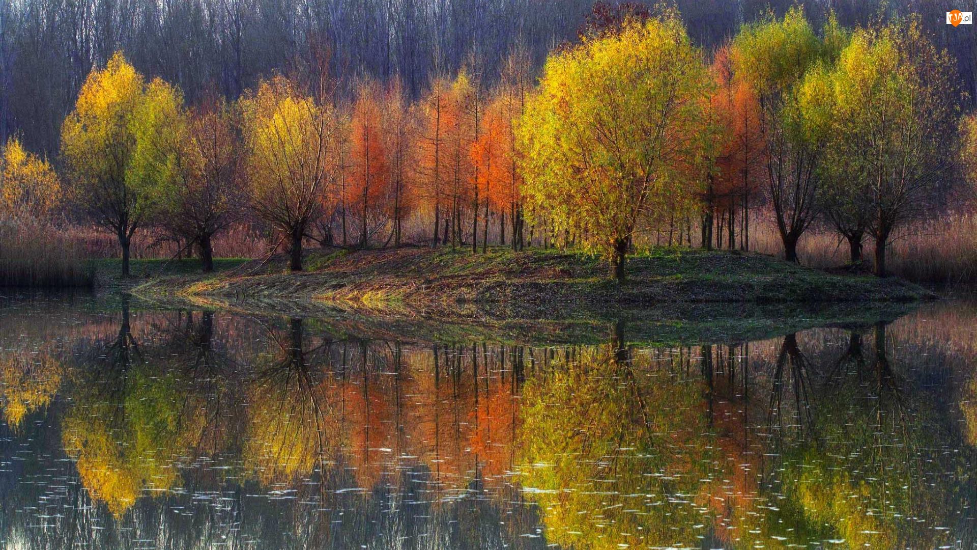 Drzewa, Odbicie, Kolorowe, Jesień, Staw