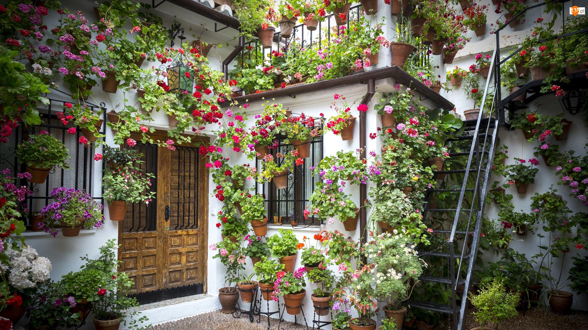 Pelargonie, Schody, Kwiaty, Dom, Fasada