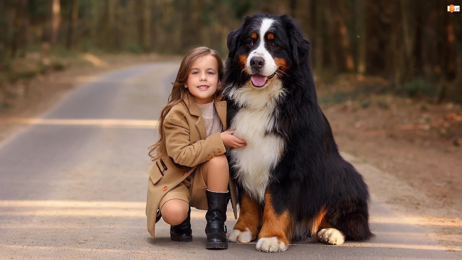 Drzewa, Dziewczynka, Berneński pies pasterski, Droga