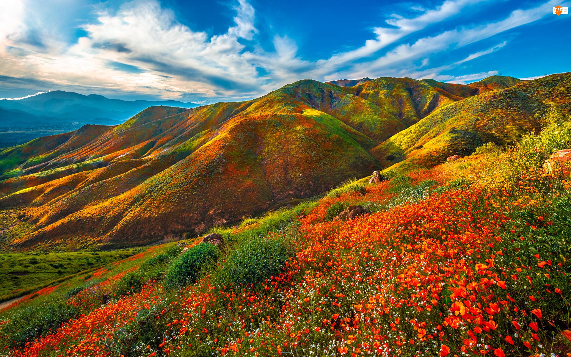 Kwiaty, Łąka, Góry, Maczki kalifornijskie, Wzgórza, Pozłotki