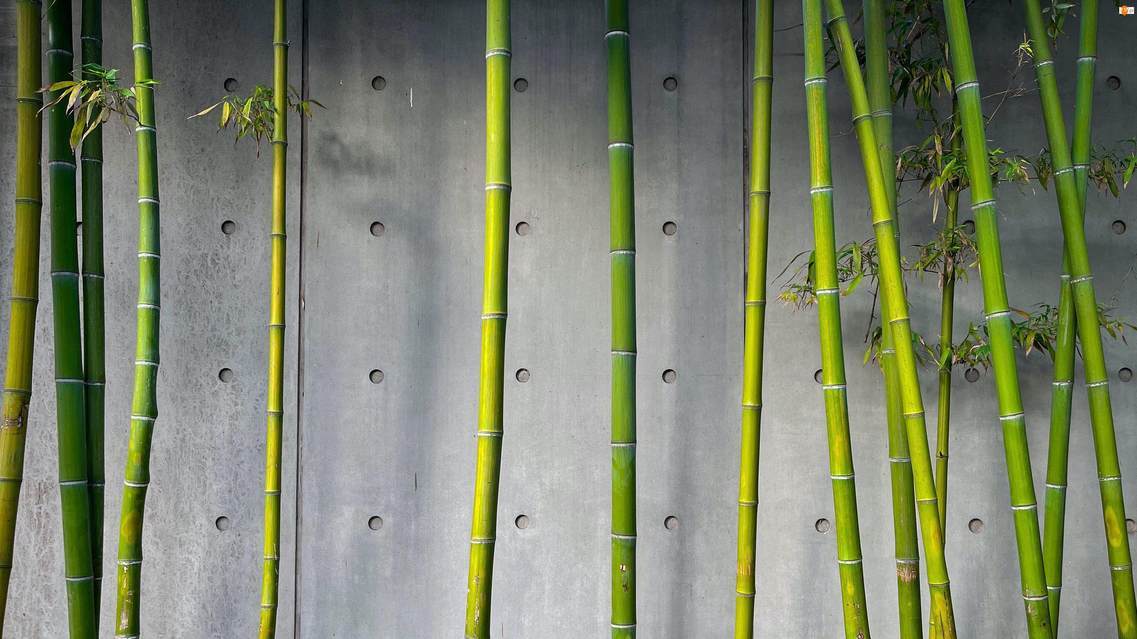 Ściana, Bambus, Łodygi, Roślina