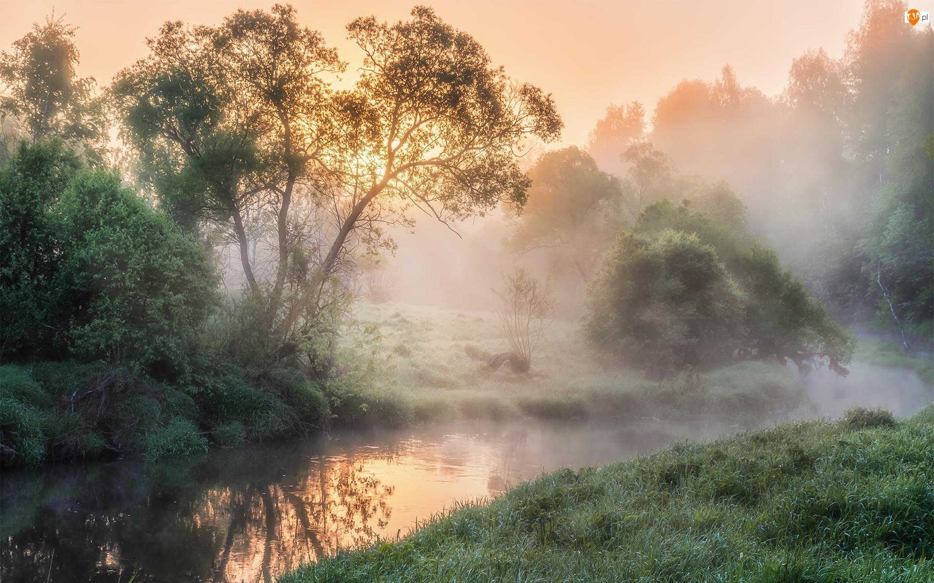 Drzewa, Rzeka, Mgła, Wschód słońca