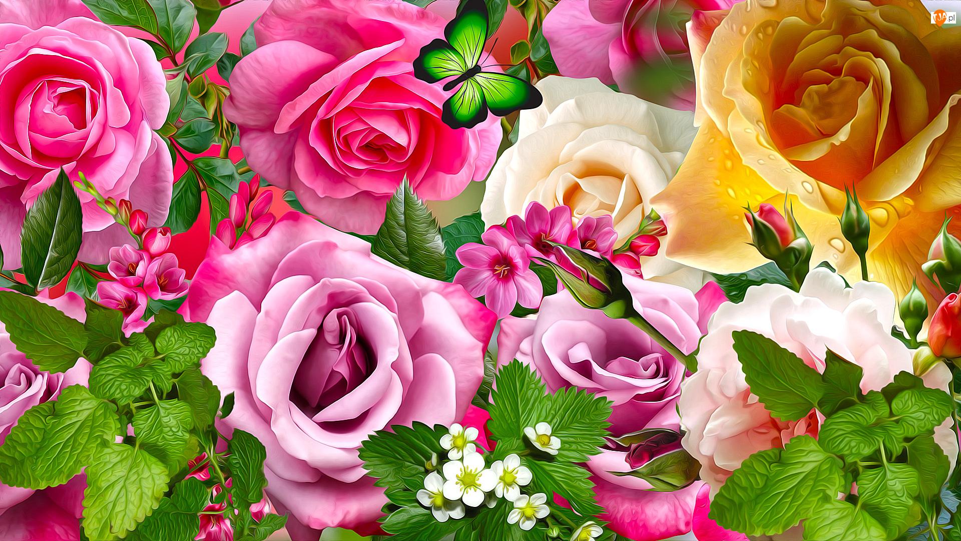Motyl, 2D, Róże, Kwiaty, Mięta