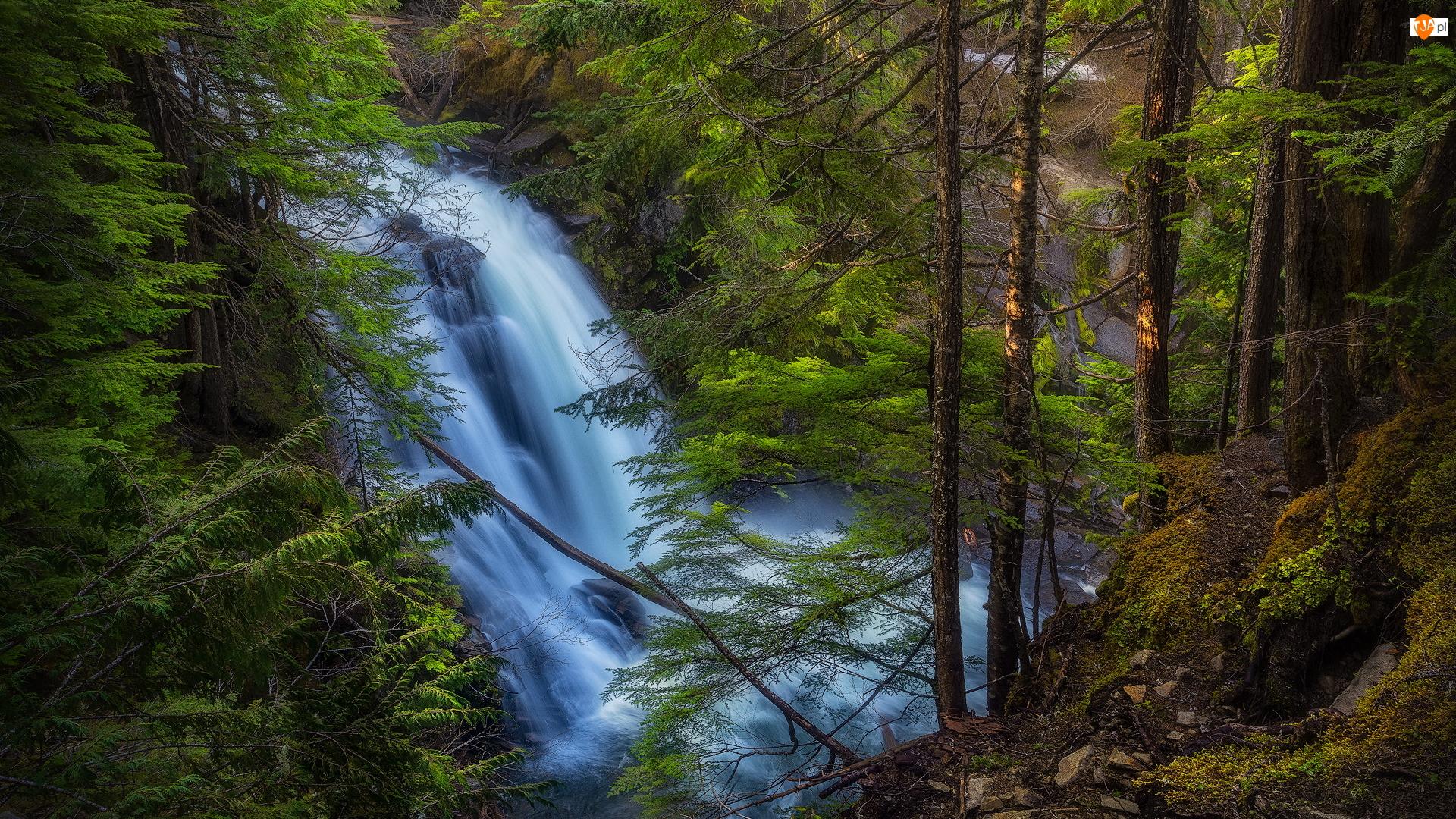 Wodospad, Las, Zielone, Drzewa