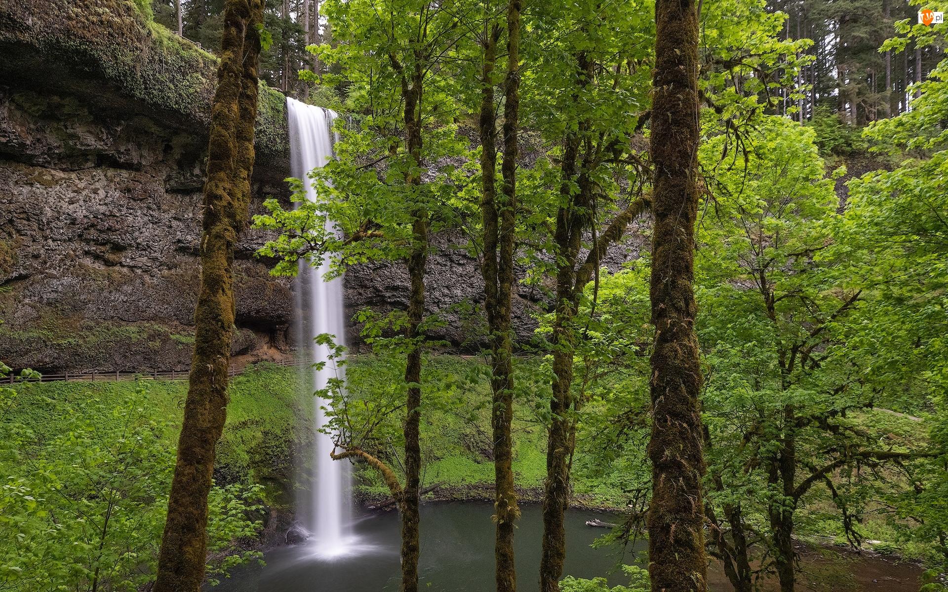 Oregon, Park stanowy, Drzewa, Stany Zjednoczone, Omszałe, Wodospad South Falls, Silver Falls State Park