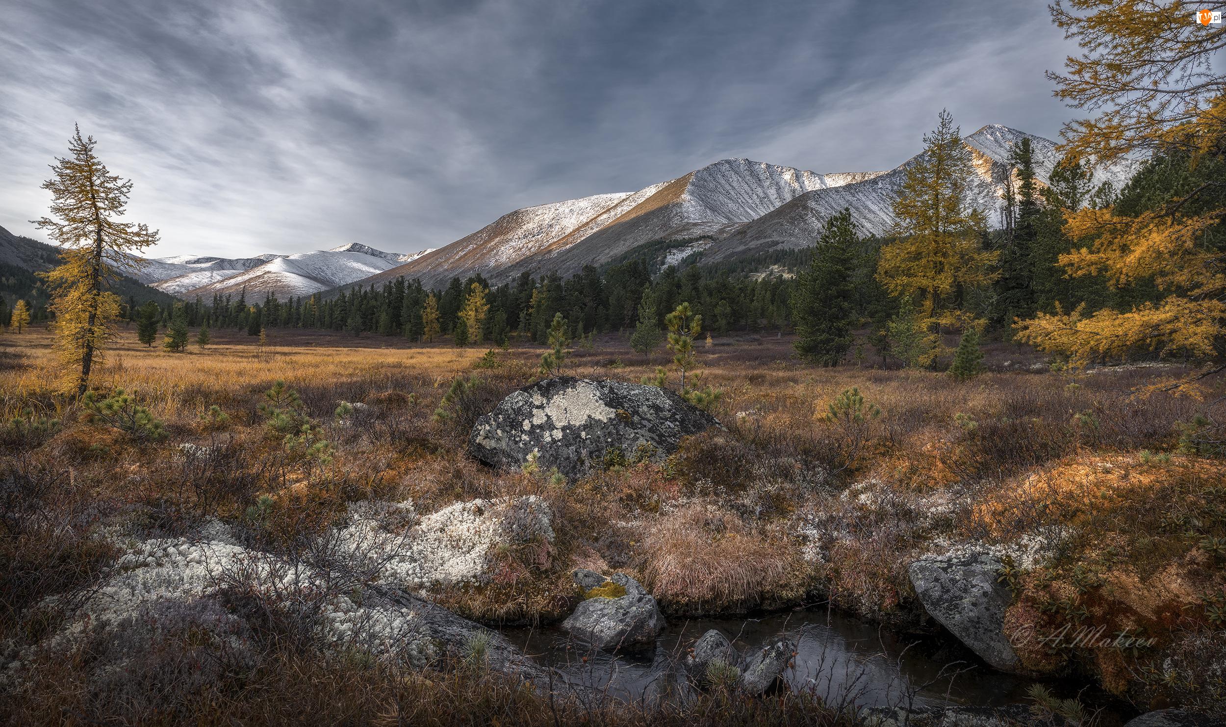 Skały, Rośliny, Góry, Jesień, Drzewa
