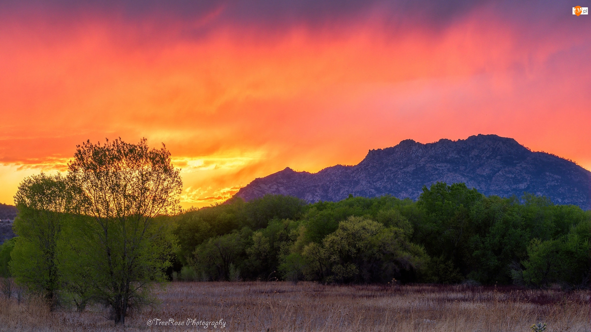 Trawa, Zachód słońca, Góry, Drzewa
