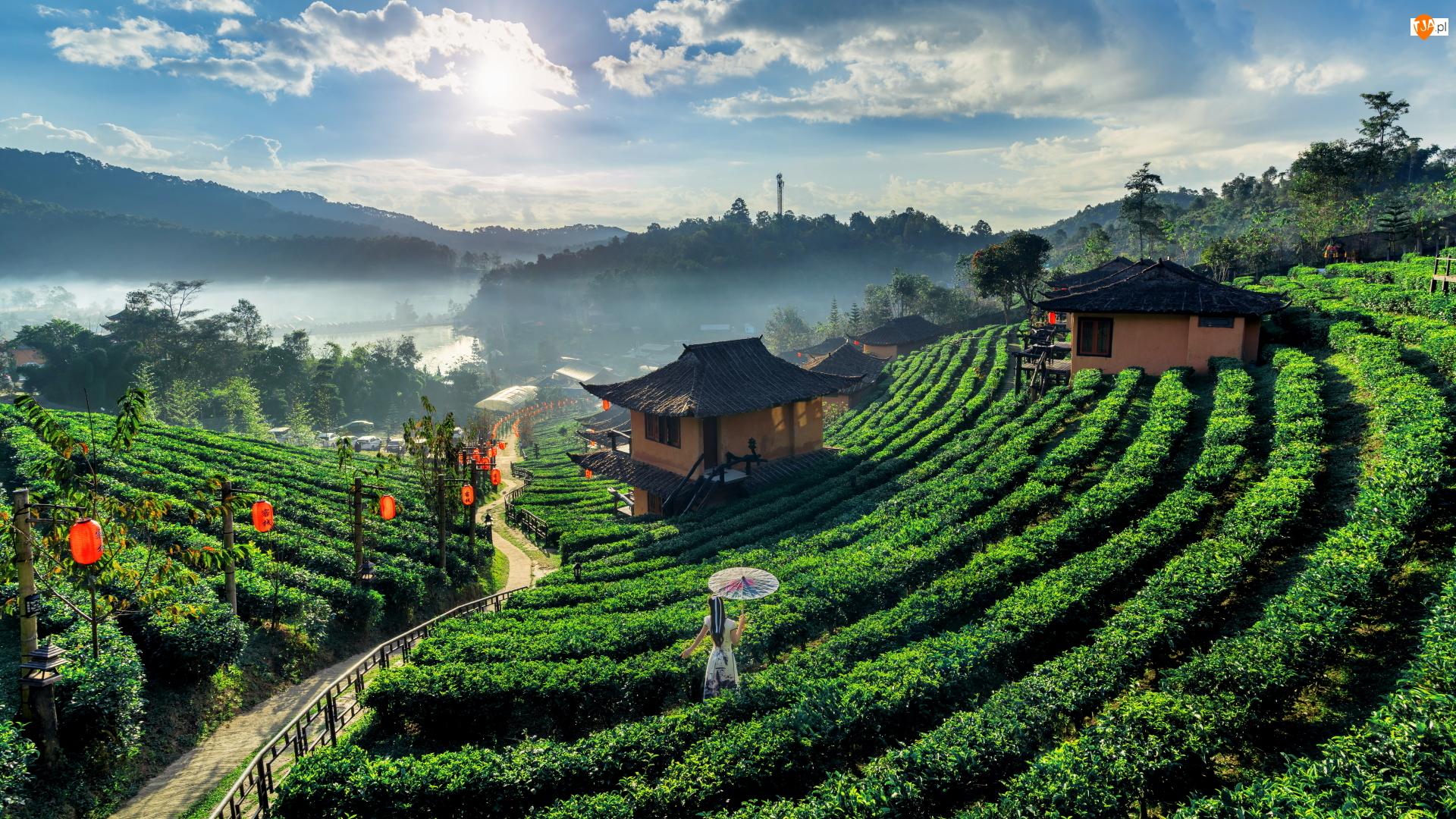 Tajlandia, Wioska, Ban Rak Thai, Parasolka, Herbaty, Plantacja, Domy, Ścieżka, Kobieta, Prowincja Mae Hong Son