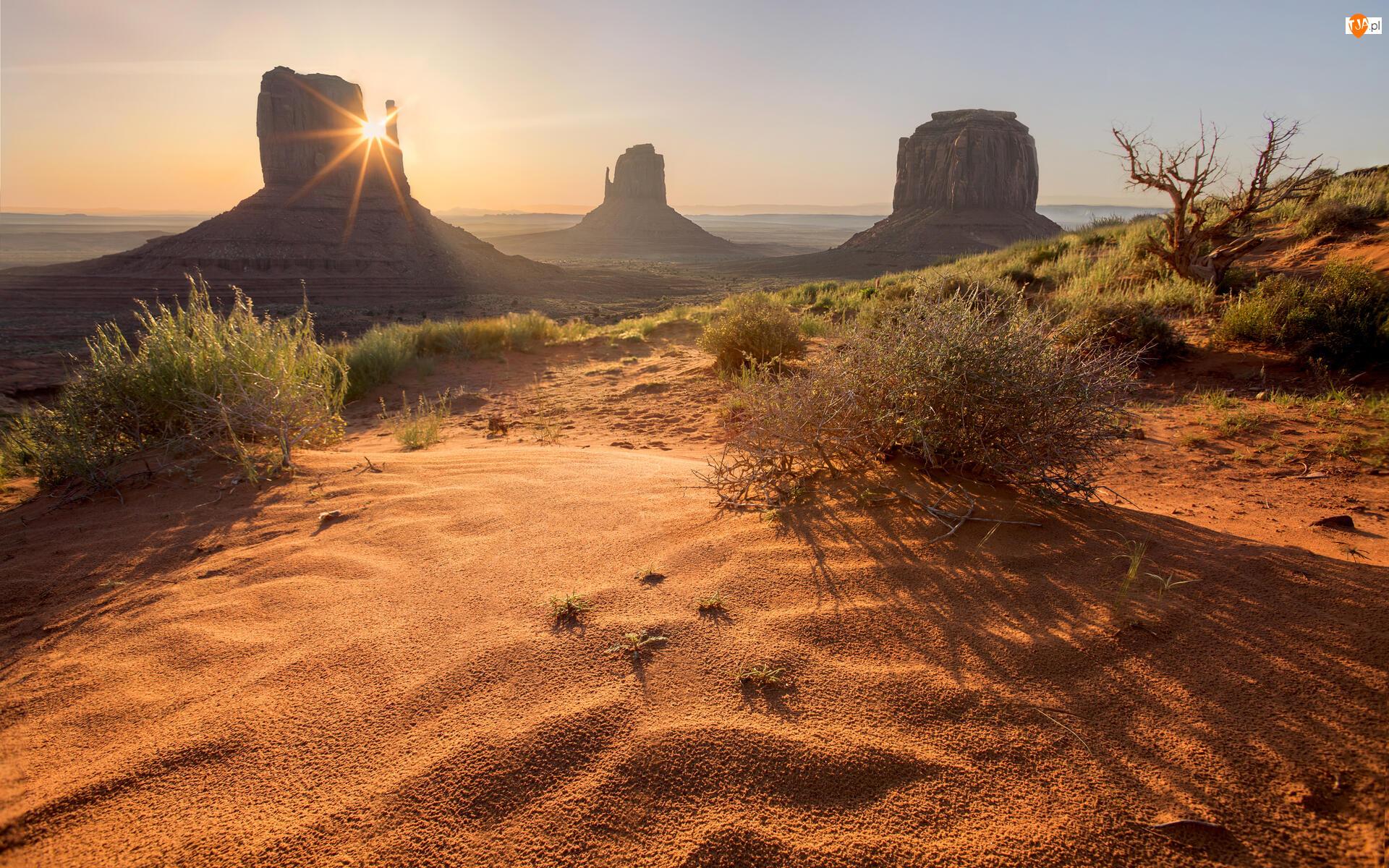 Region Monument Valley, Dolina Pomników, Stany Zjednoczone, Wyżyna Kolorado, Stan Utah, Krzewy, Skały