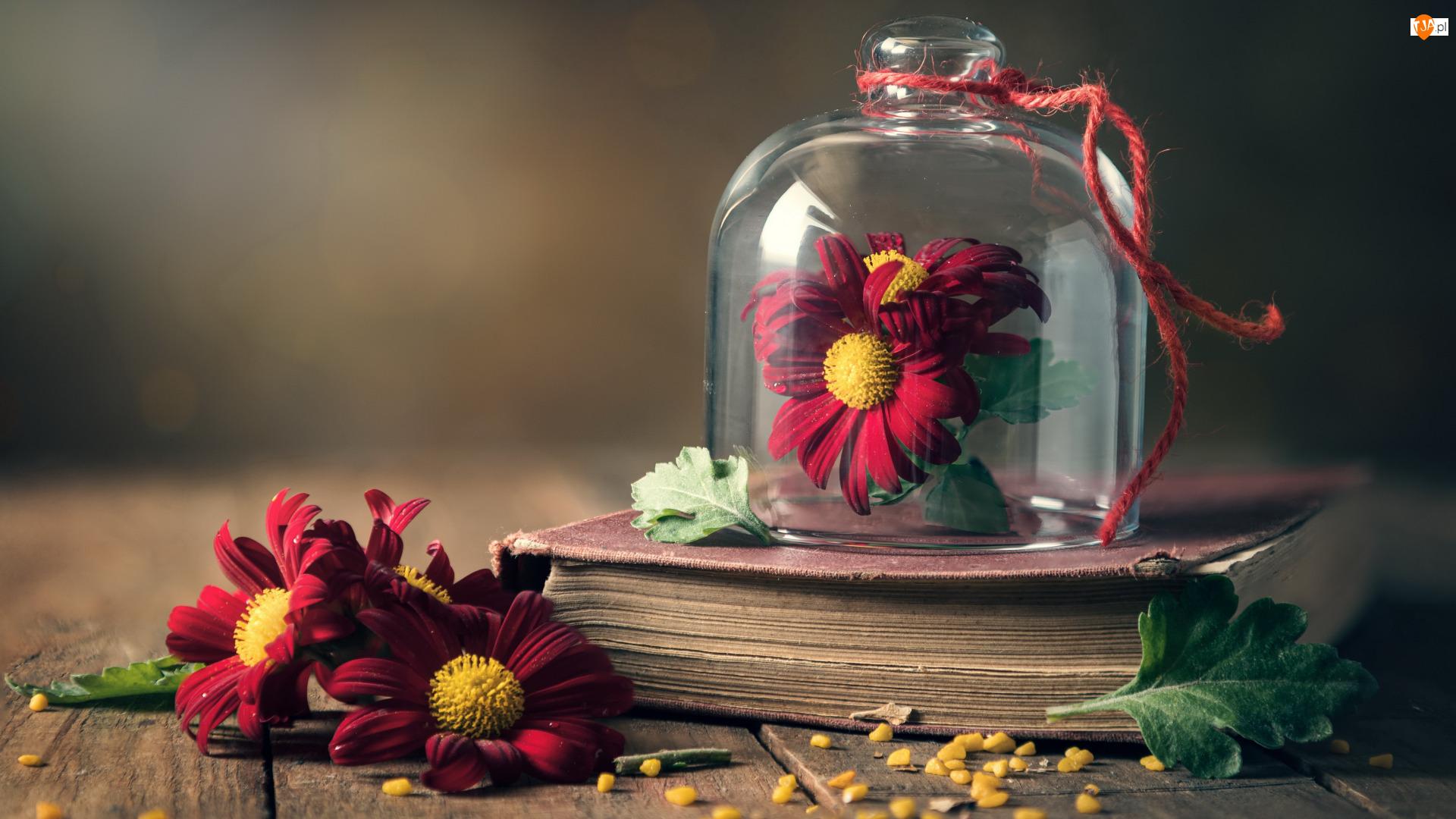 Kwiaty, Chryzantemy, Liście, Książka, Sznurek, Naczynie, Szklane