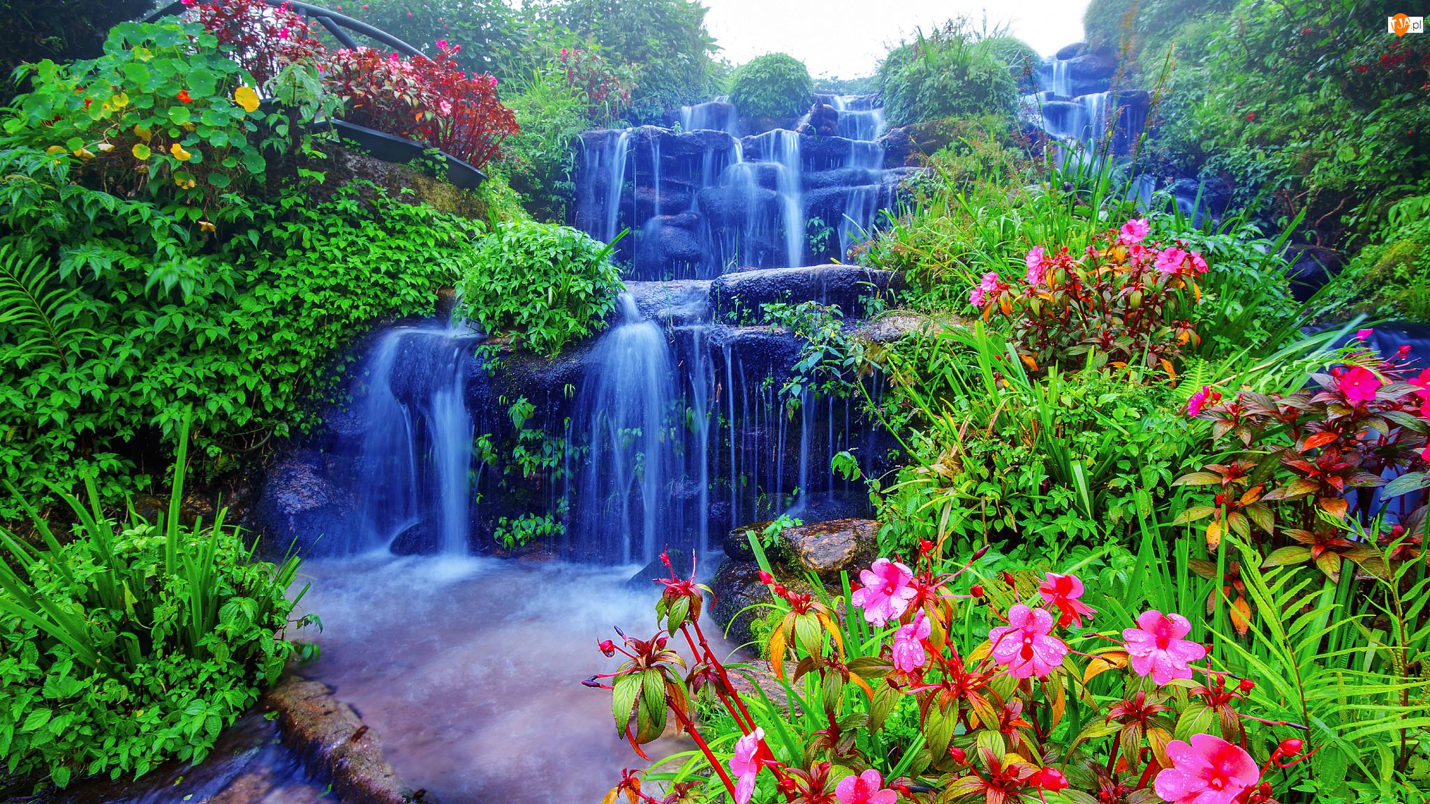 Skały, Wodospad, Kwiaty, Drzewa, Kaskada, Roślinność