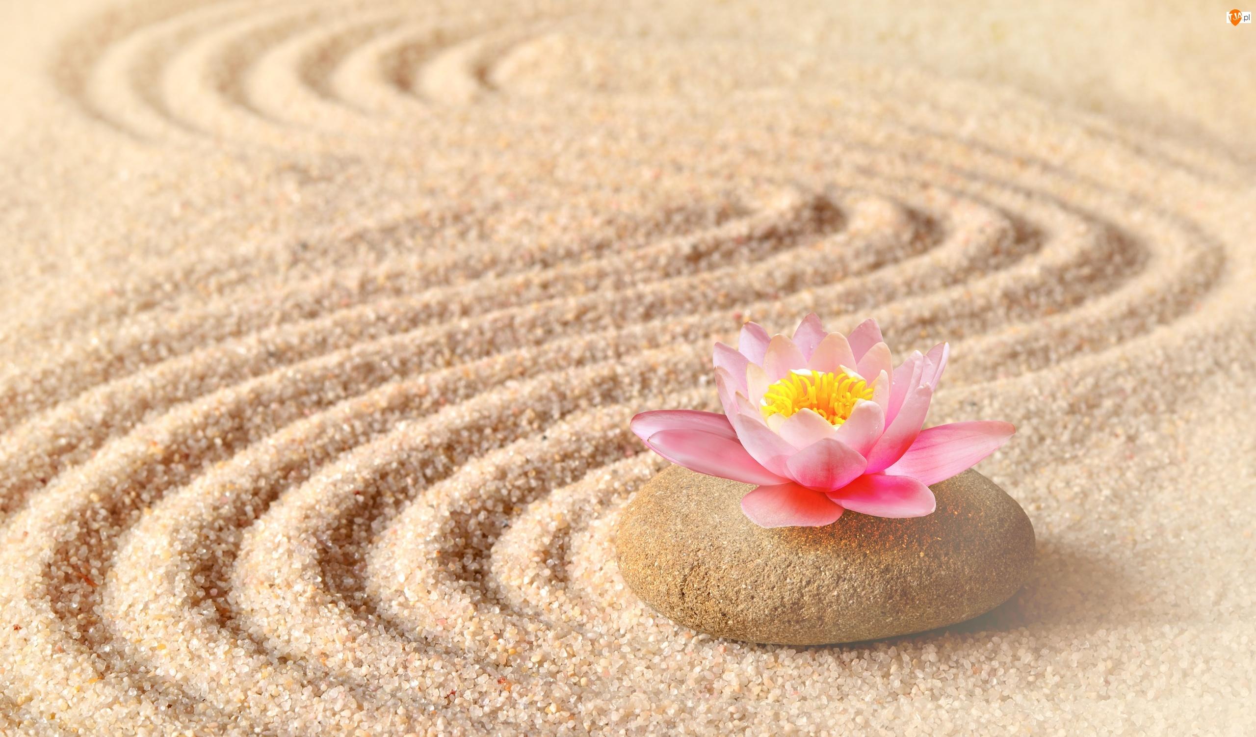 Kwiat, Różowy, Piasek Linie, Kamień, Lotosu