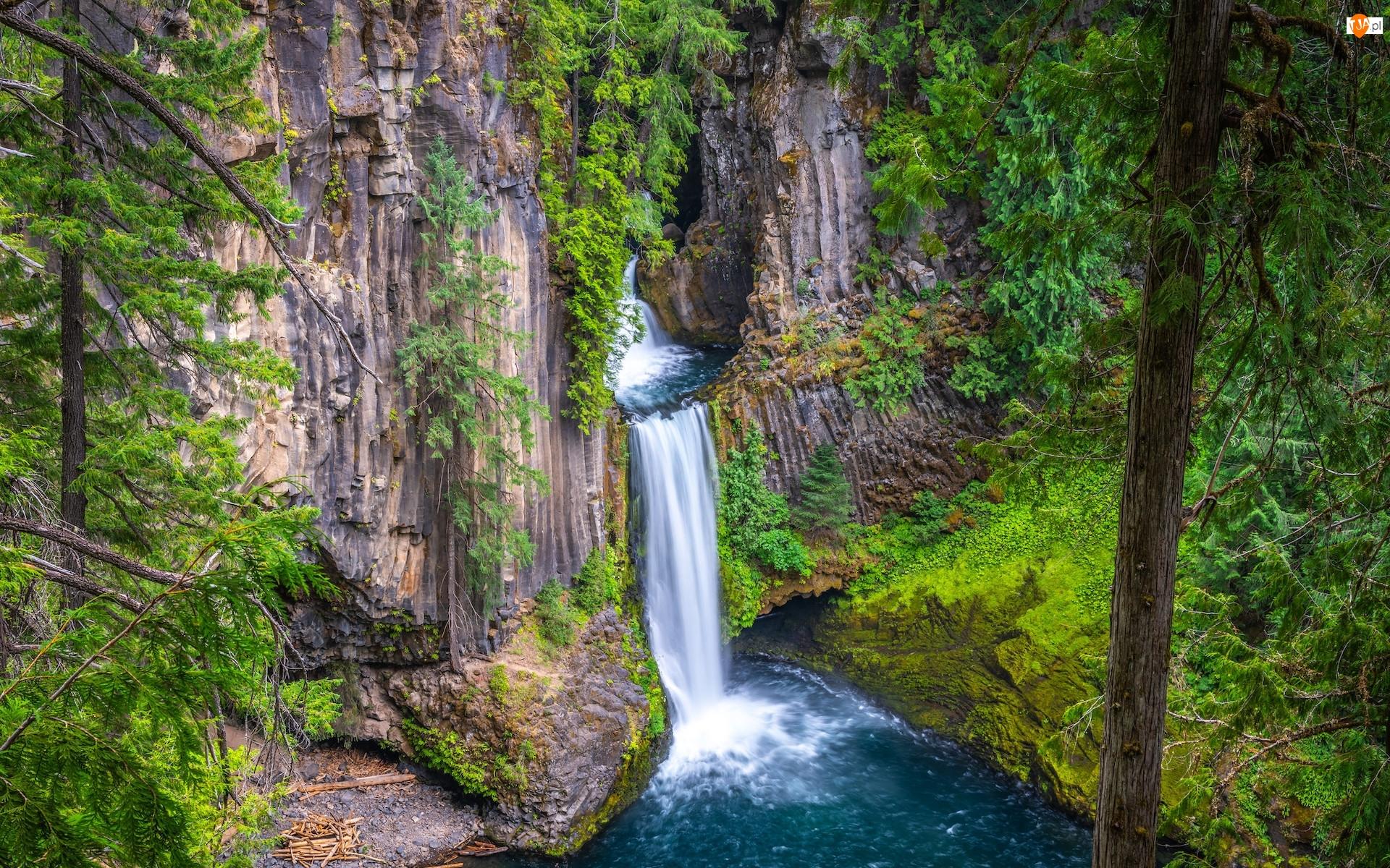 Stany Zjednoczone, Zielone, Oregon, Wodospad Toketee, Park Narodowy Jeziora Kraterowego, Drzewa, Rośliny, Las, Skały