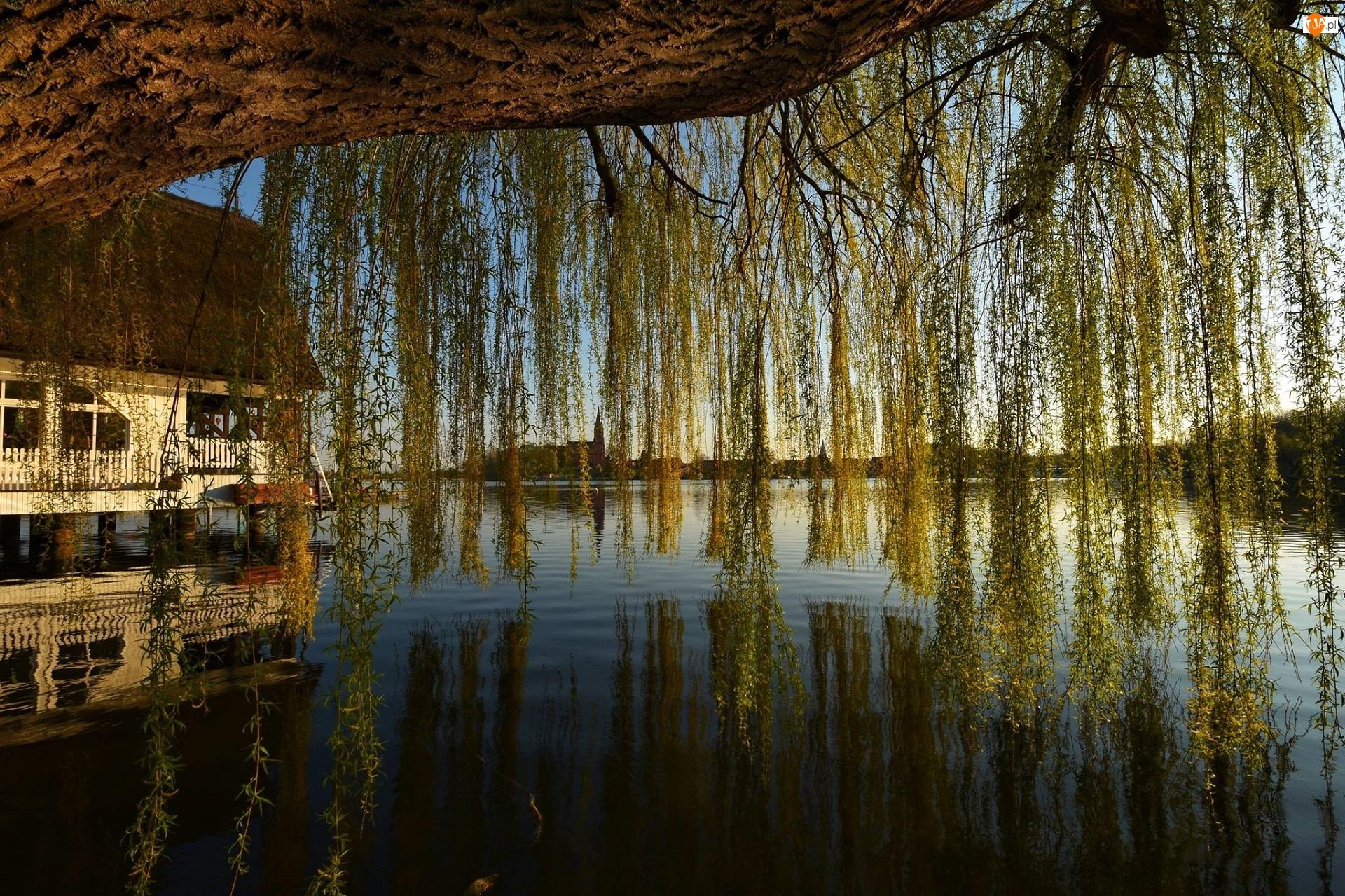 Dom, Jezioro, Drzewo, Wierzba