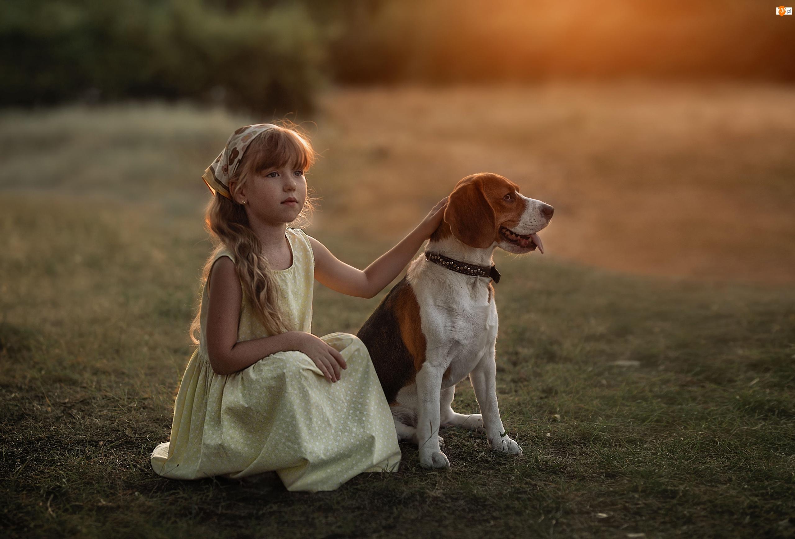 Dziewczynka, Chustka, Rozmycie, Trawa, Beagle, Pies, Głaskanie