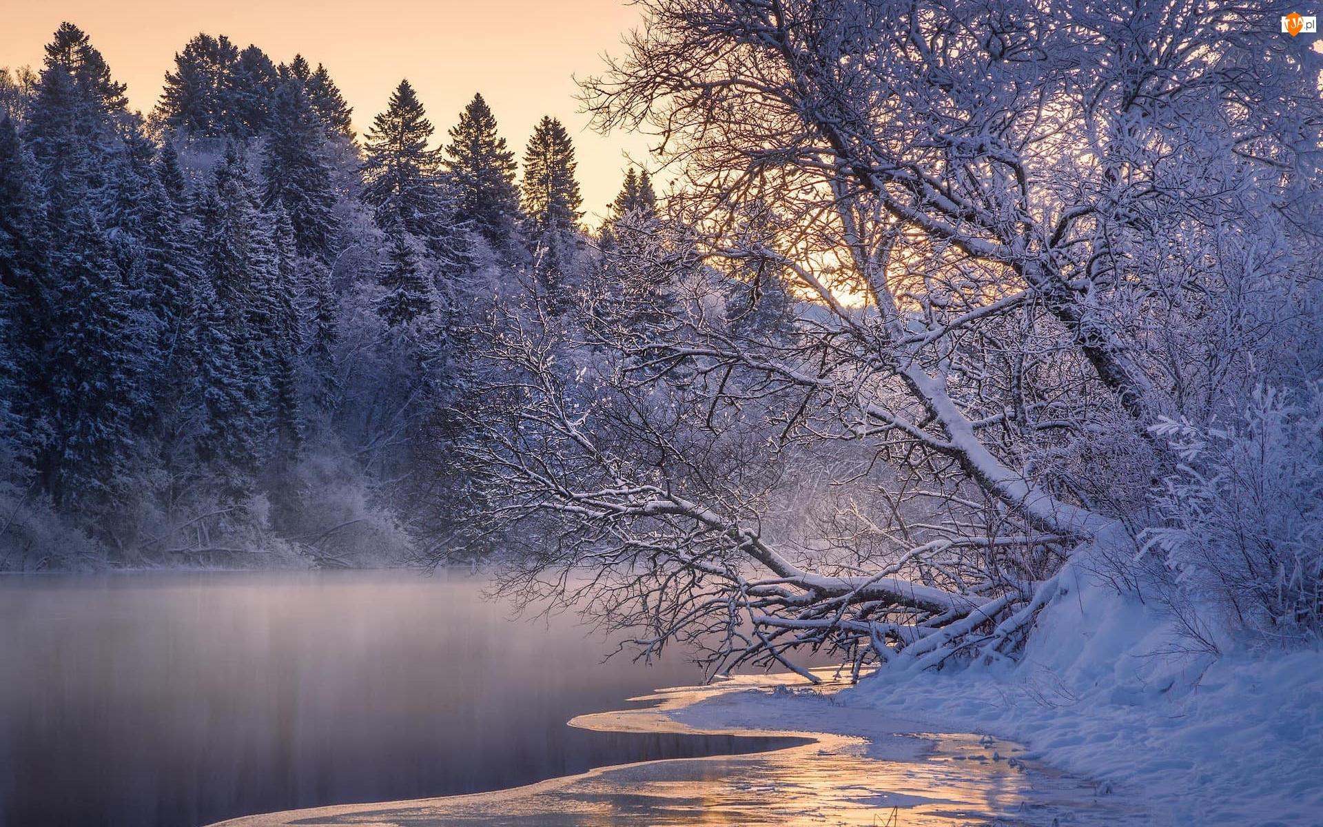 Rzeka, Drzewa, Śnieg, Zima, Rzeka, Wschód słońca, Mgła