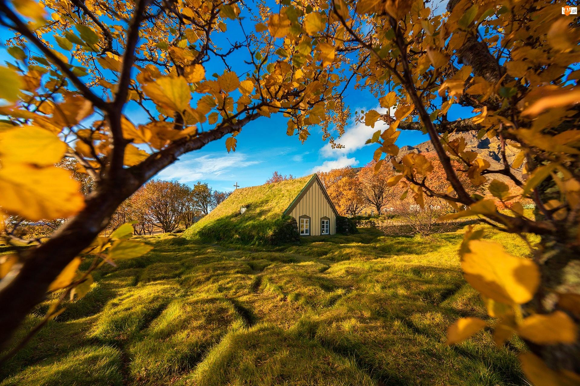 Hof, Kościół Hofskirkja, Jesień, Islandia, Gałęzie, Drzewa, Murawa
