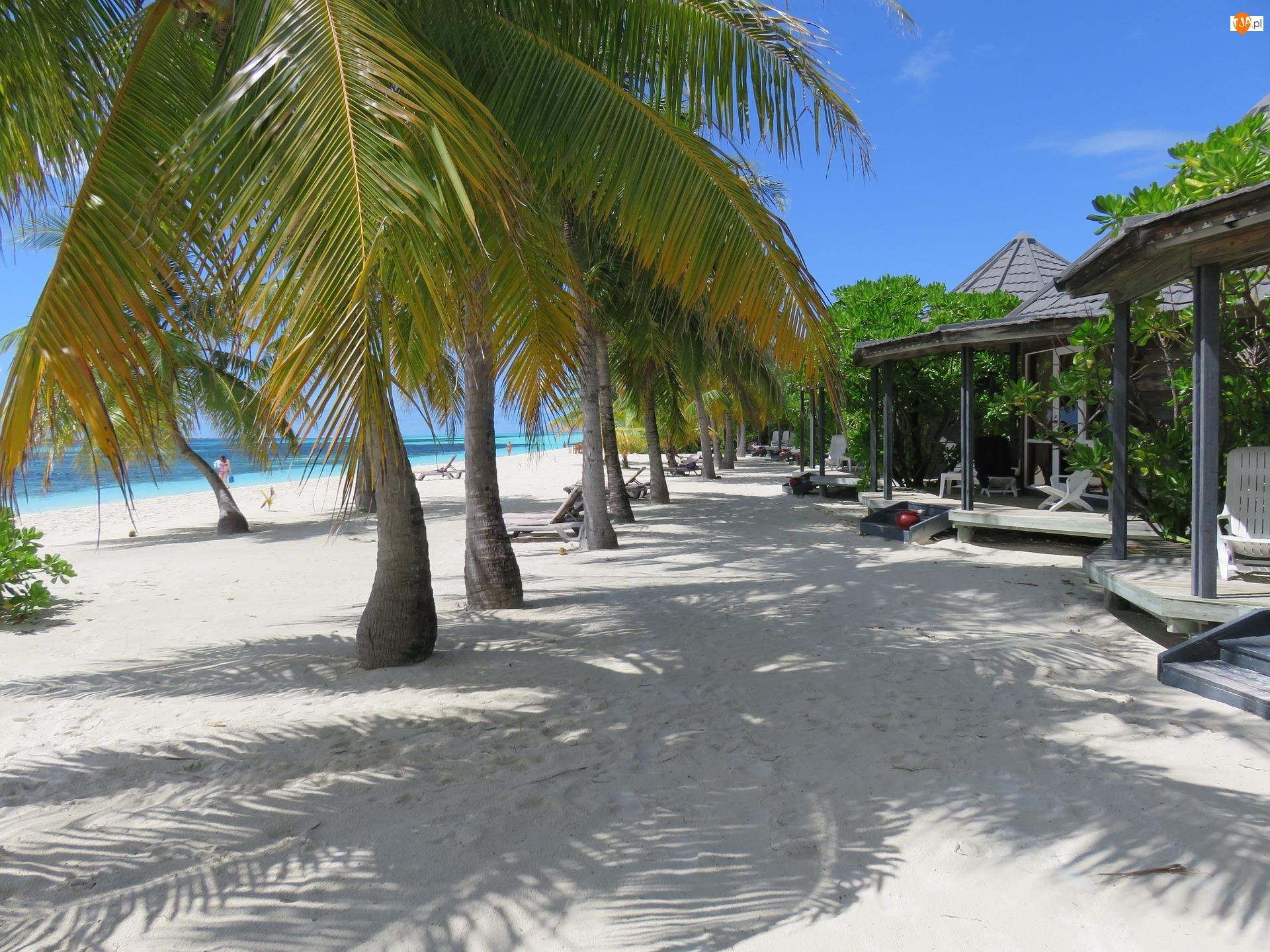 Malediwy, Palmy, Plaża, Wyspa Kuredu