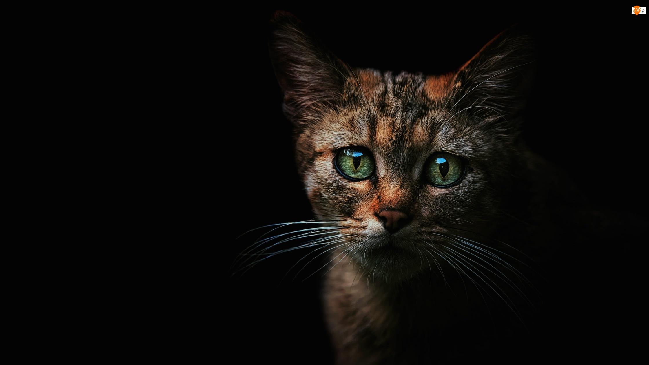 Kot, Mały, Zielone, Czarne tło, Smutne, Oczy