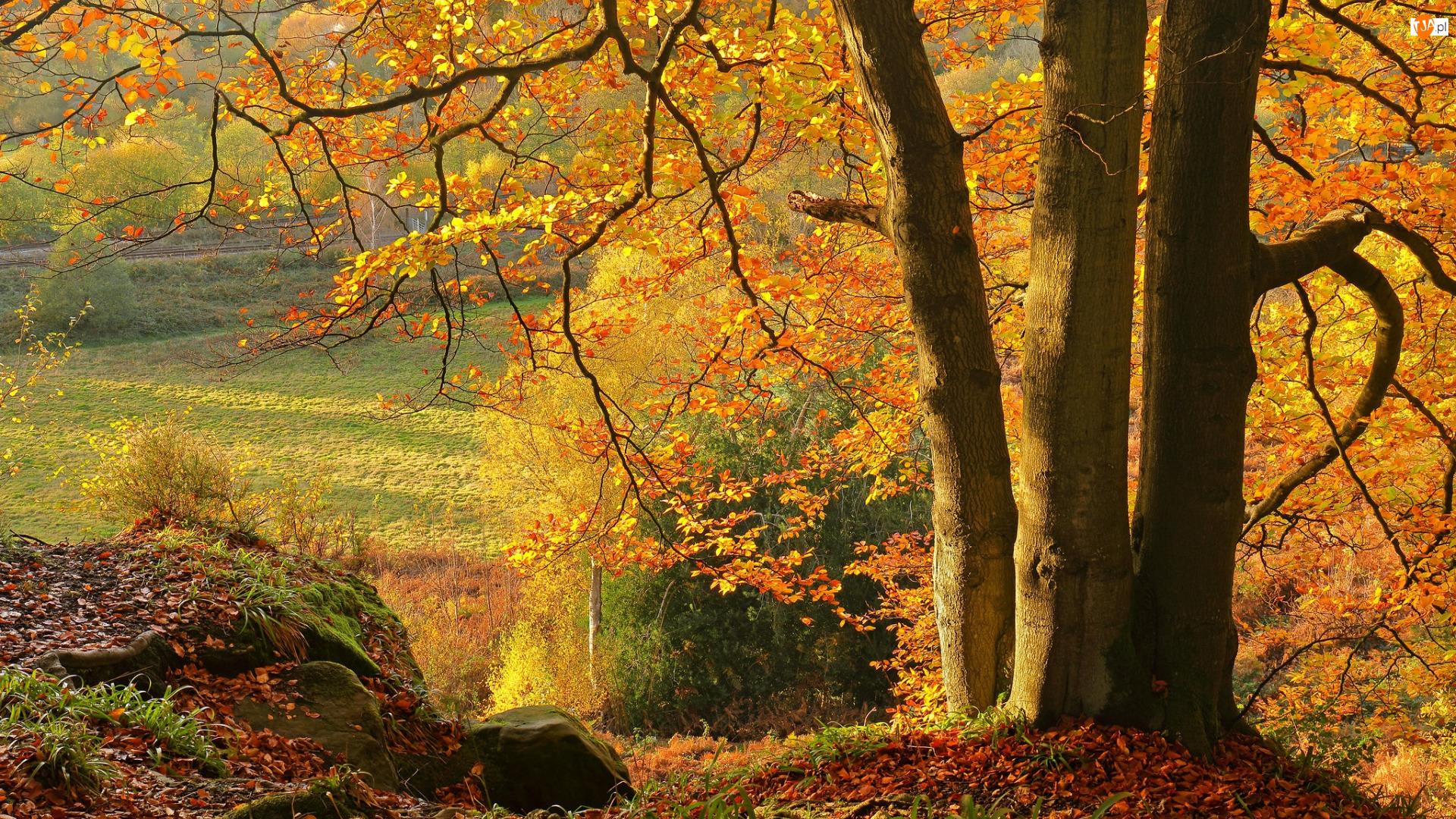 Wzgórze, Jesień, Drzewo