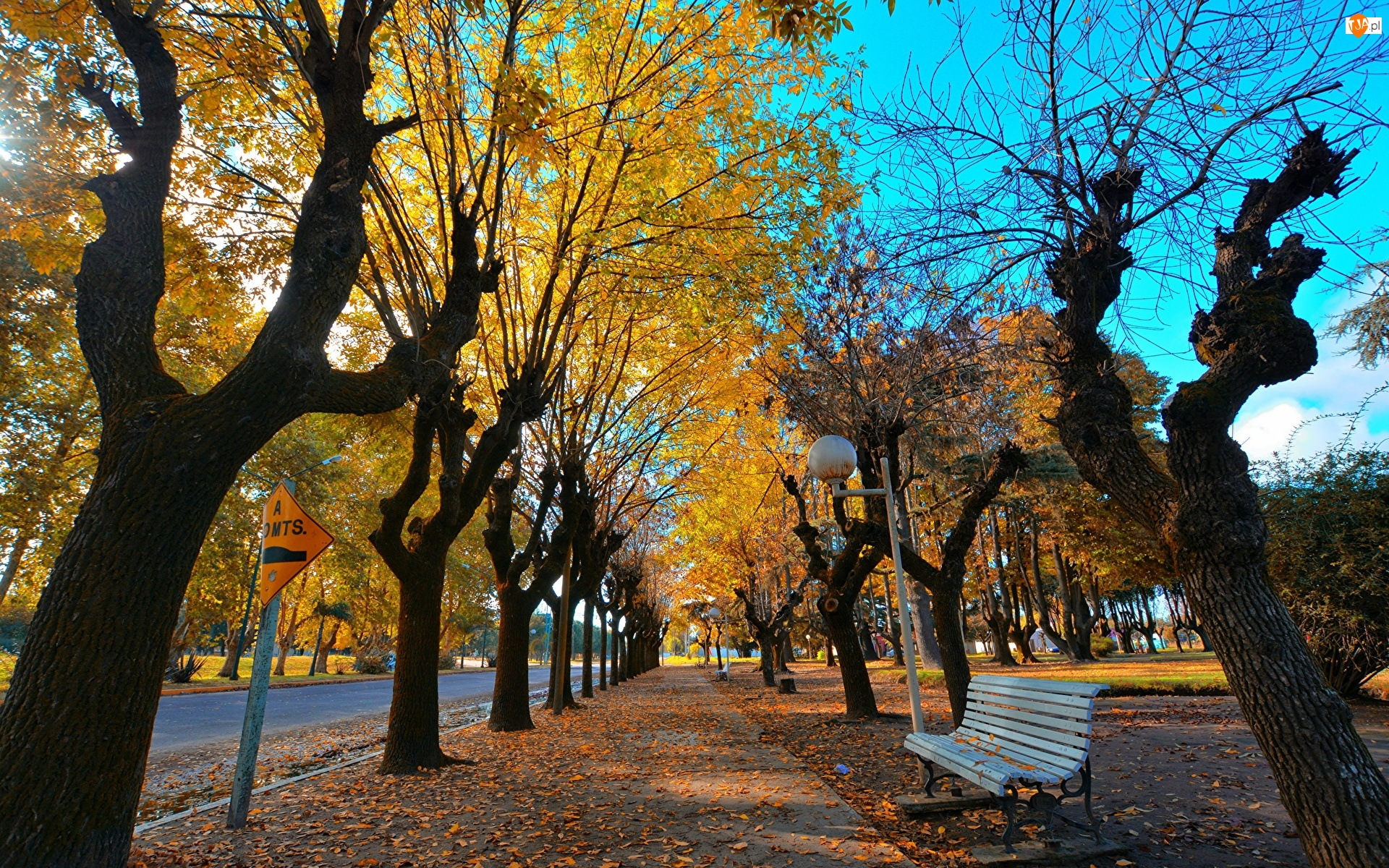 Chodnik, Drzewa, Latarnie, Jesień, Ławka, Liście, Pożółkłe